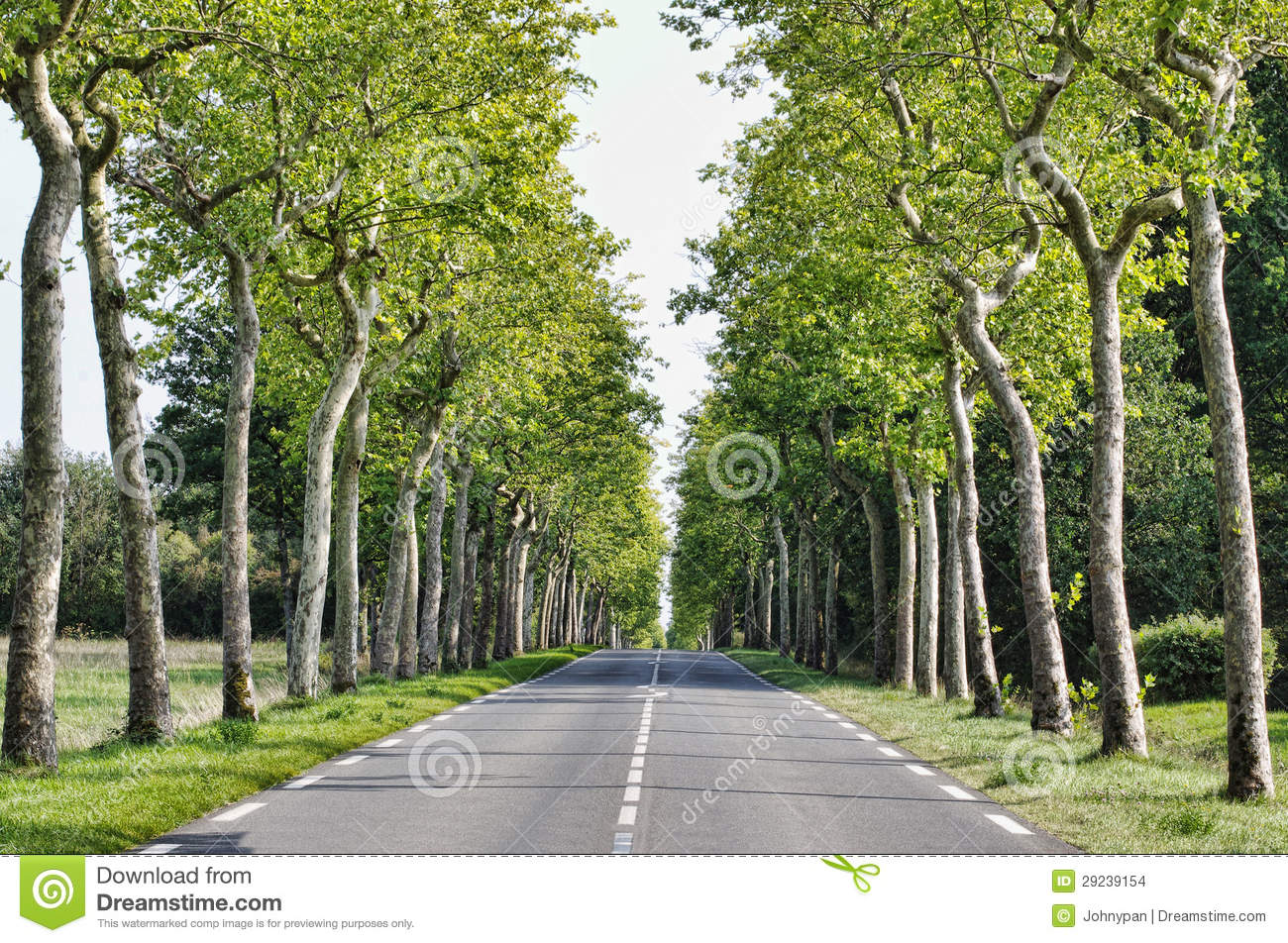 Download Estrada na floresta foto de stock. Imagem de outdoor - 29239154