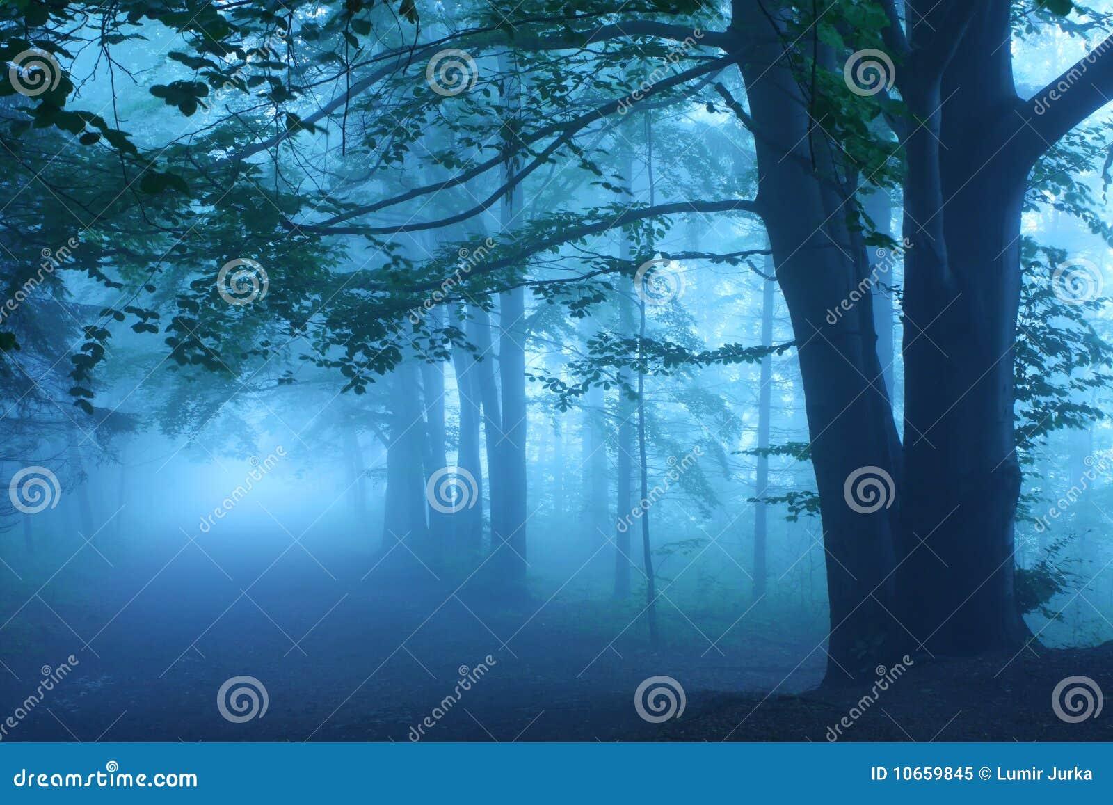 Estrada na floresta místico