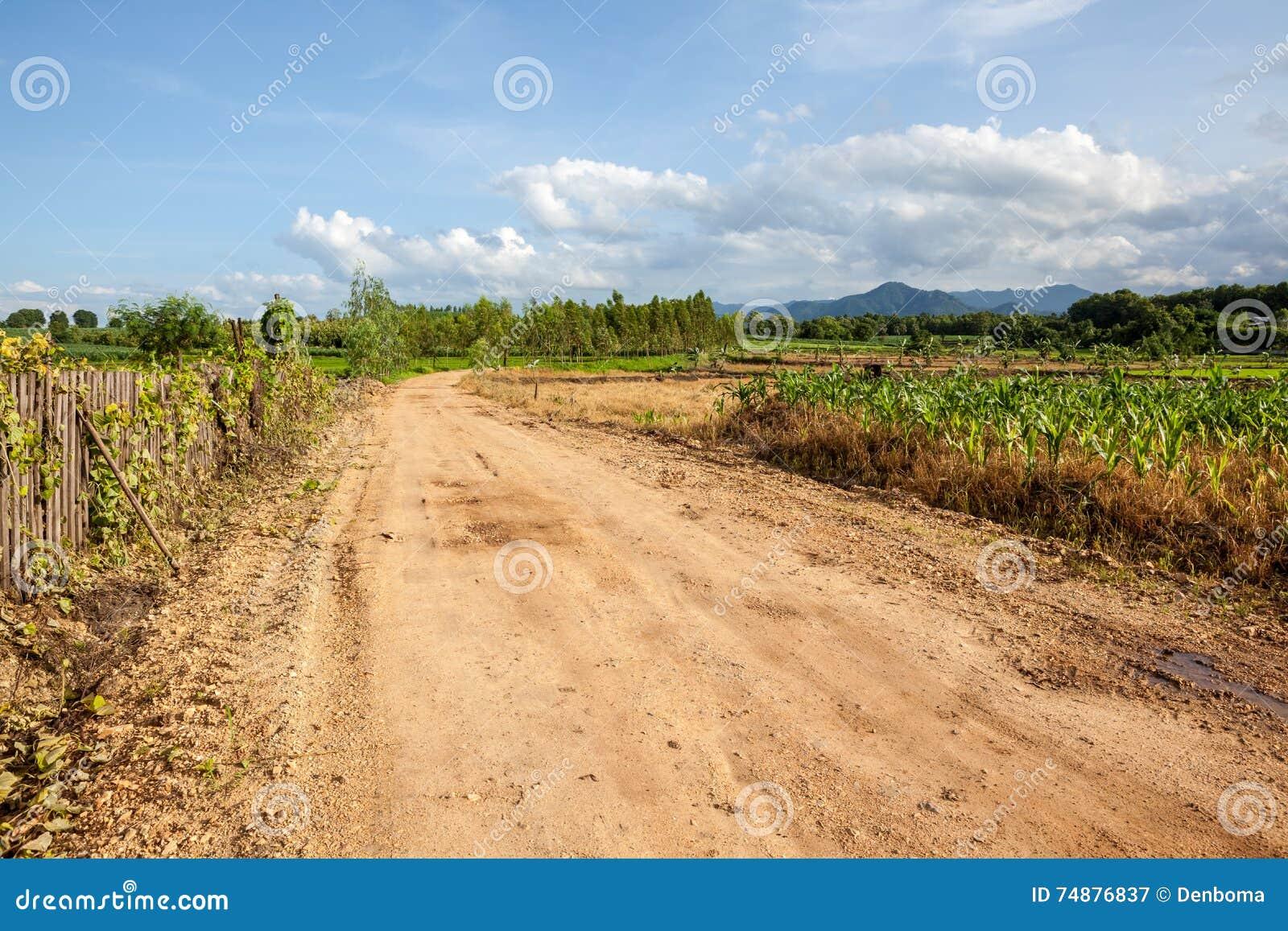 Estrada no campo