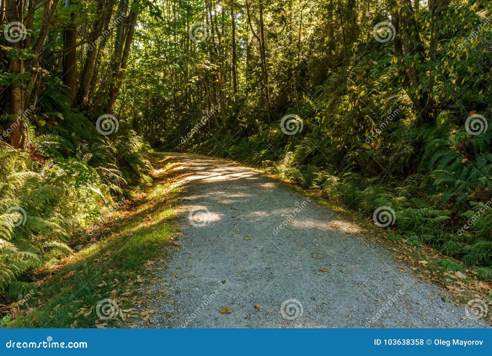 Estrada ou fuga de caminhada cênico e bonita do cascalho na floresta