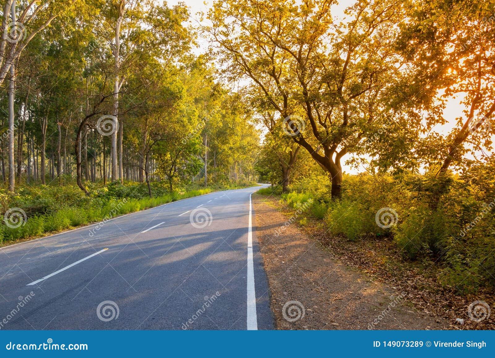 Estrada ou estrada s? atrav?s das ?rvores