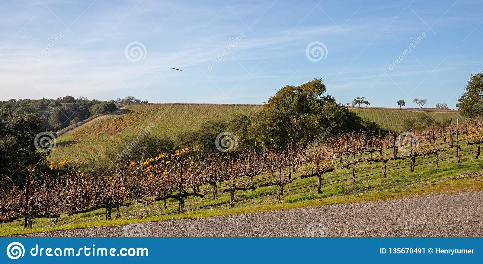 Estrada secundária através dos vinhedos da uva de Califórnia pinot nos EUA