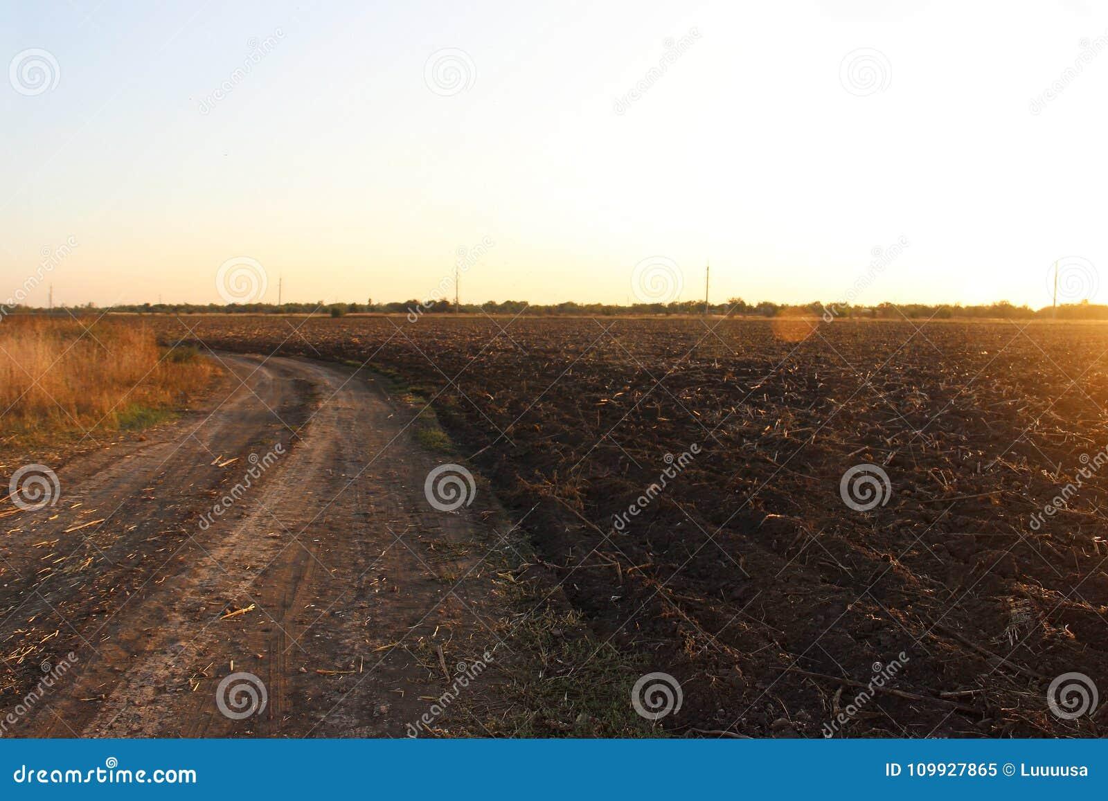Estrada secundária e campo chanfrado dos girassóis no por do sol no outono