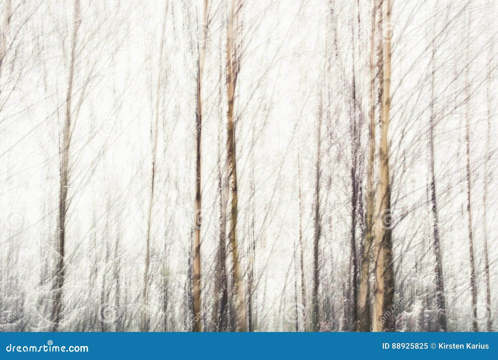 Estratto delle betulle