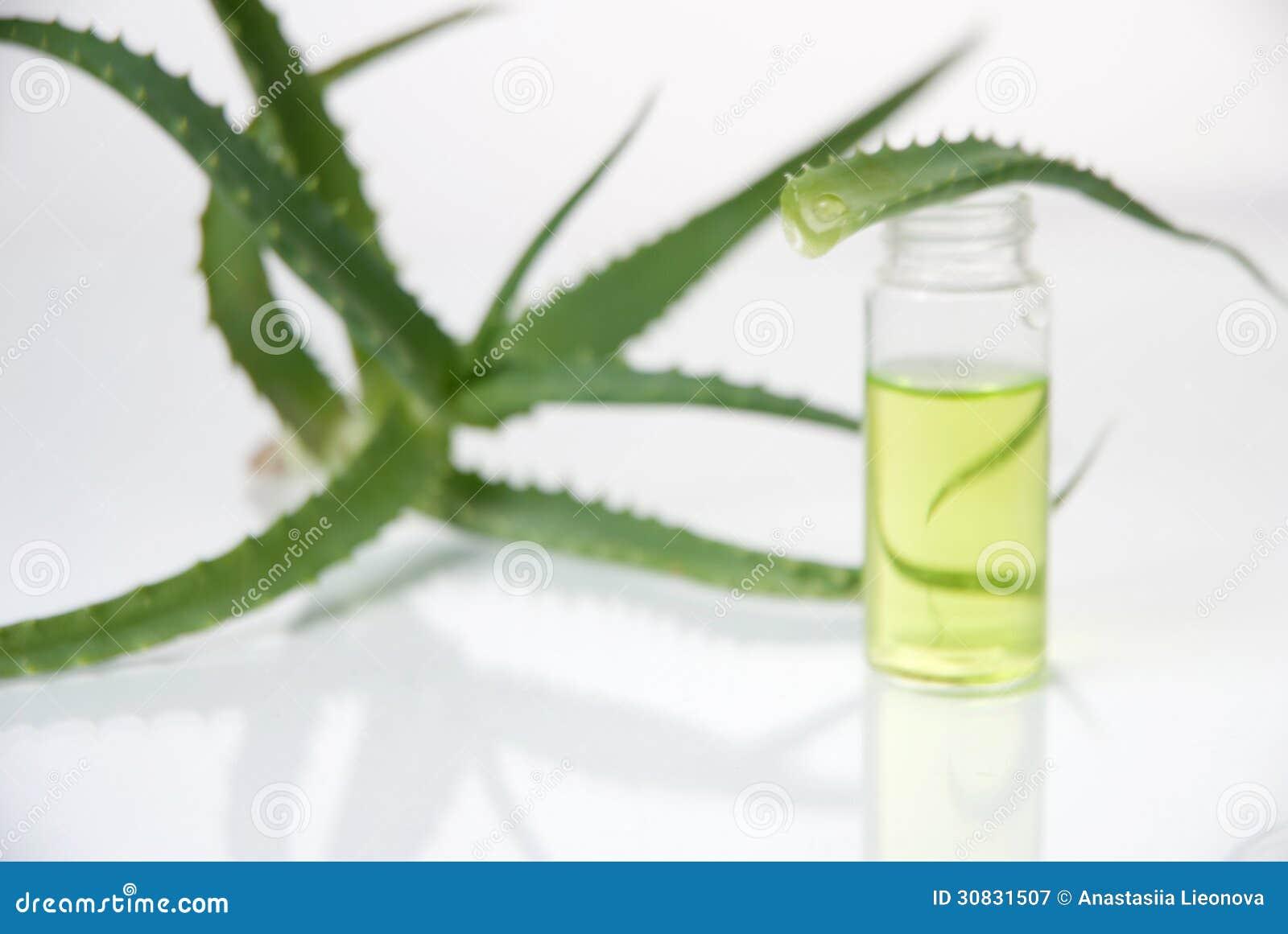 Estratto di piante. Chimica naturale.