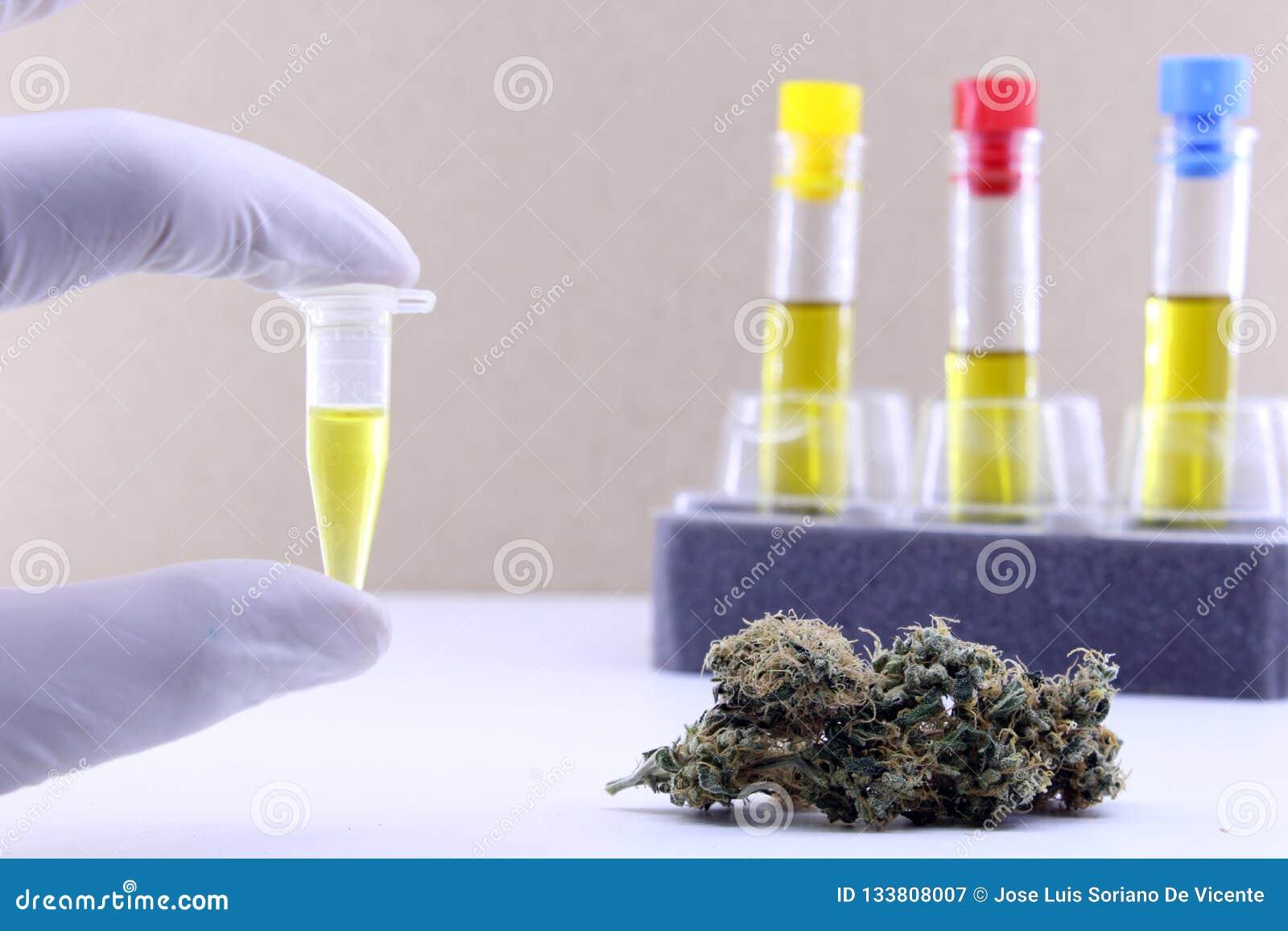 Estrazione dell olio della cannabis