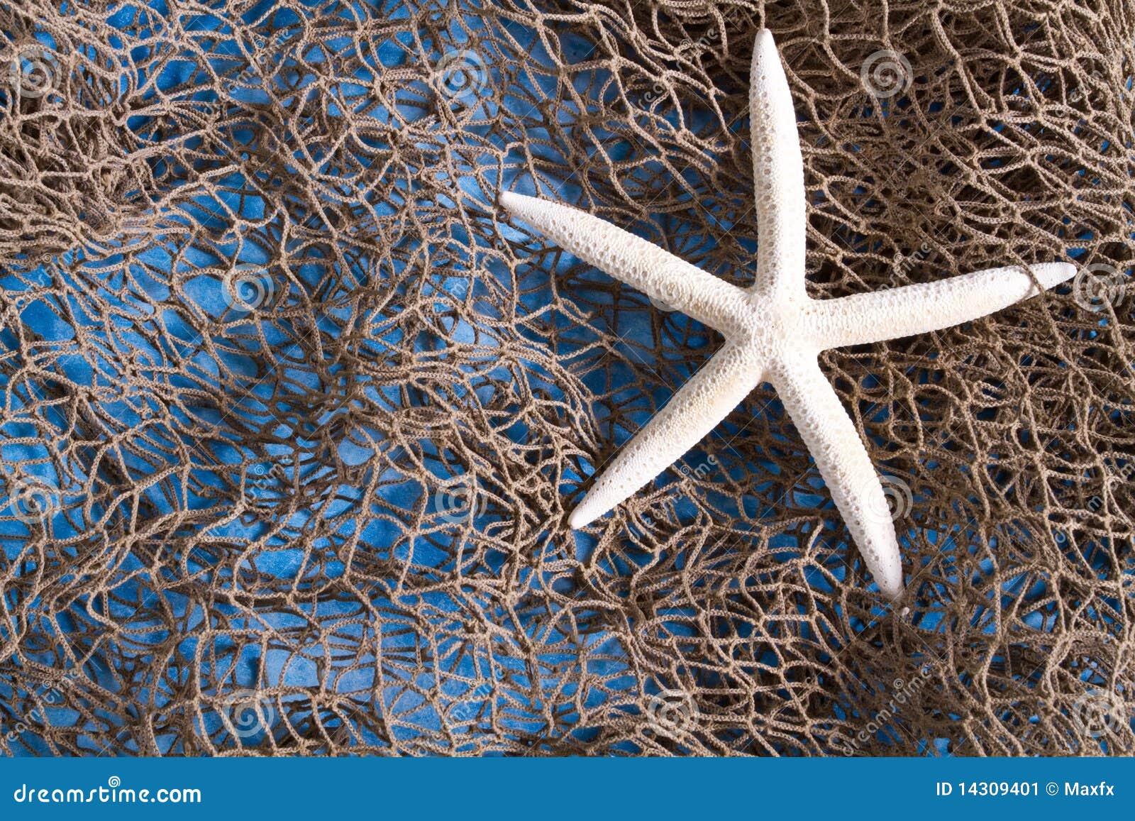 Estrela de mar na rede de pesca