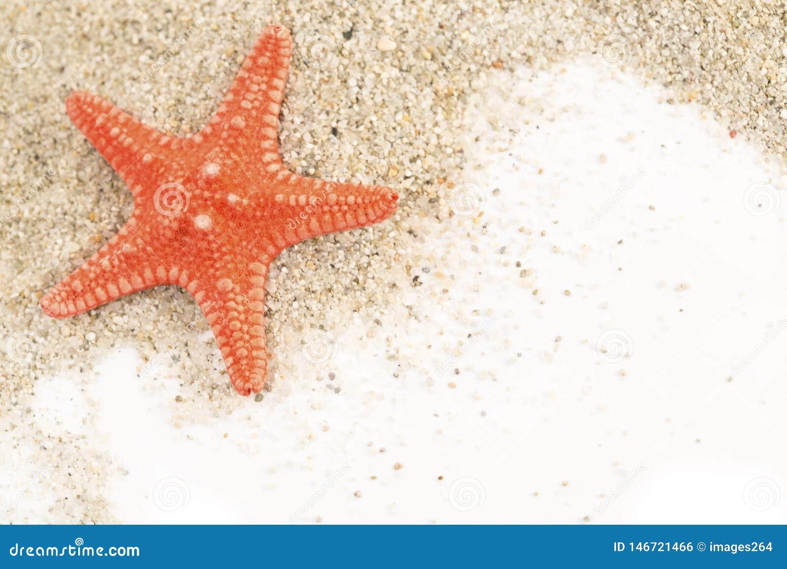 Estrela do mar em uma areia
