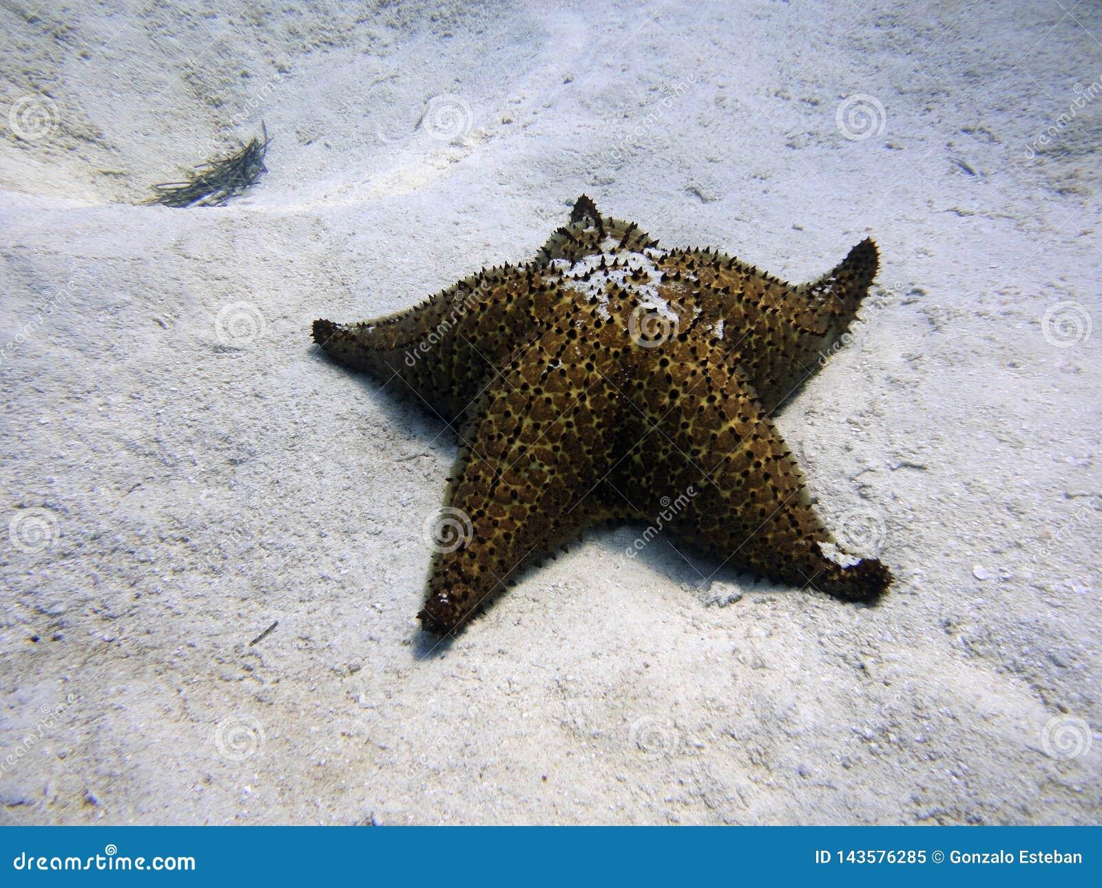 Estrela do mar no fundo do mar