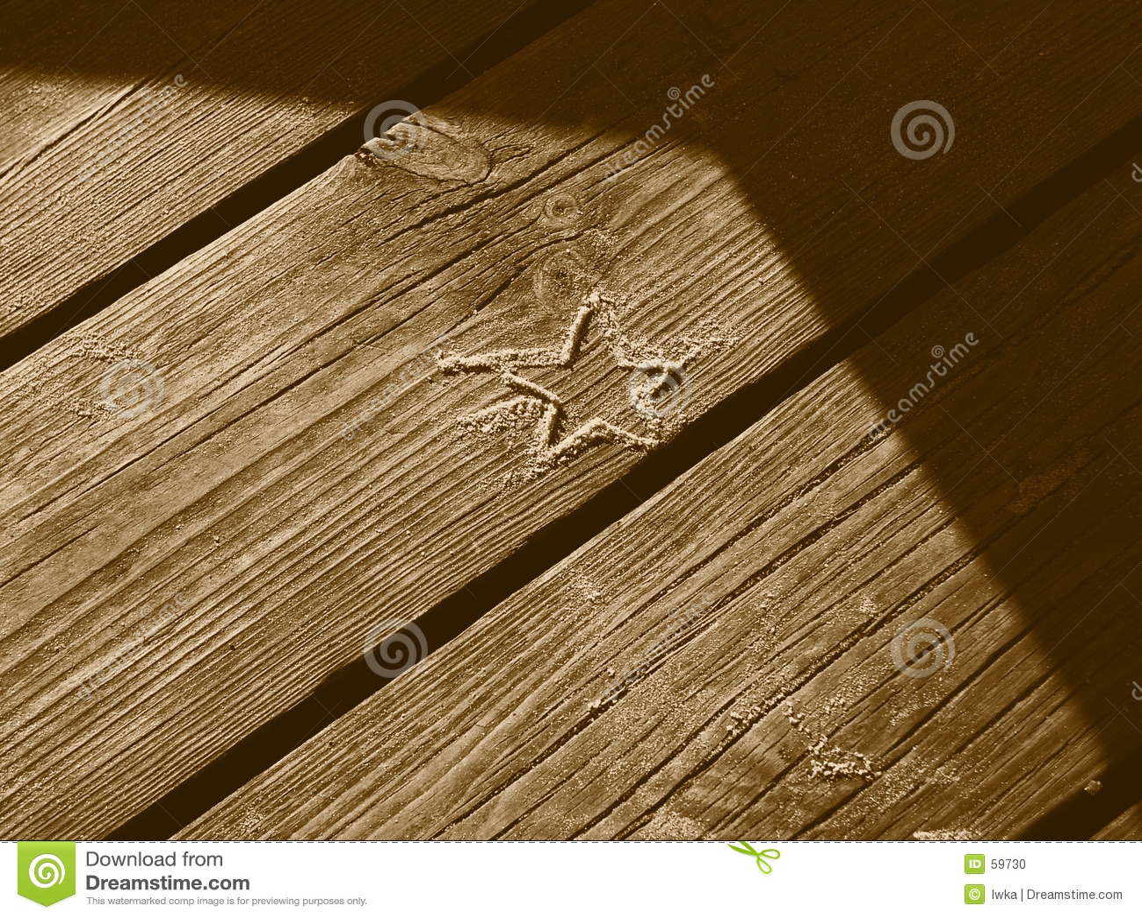 Estrella de la arena