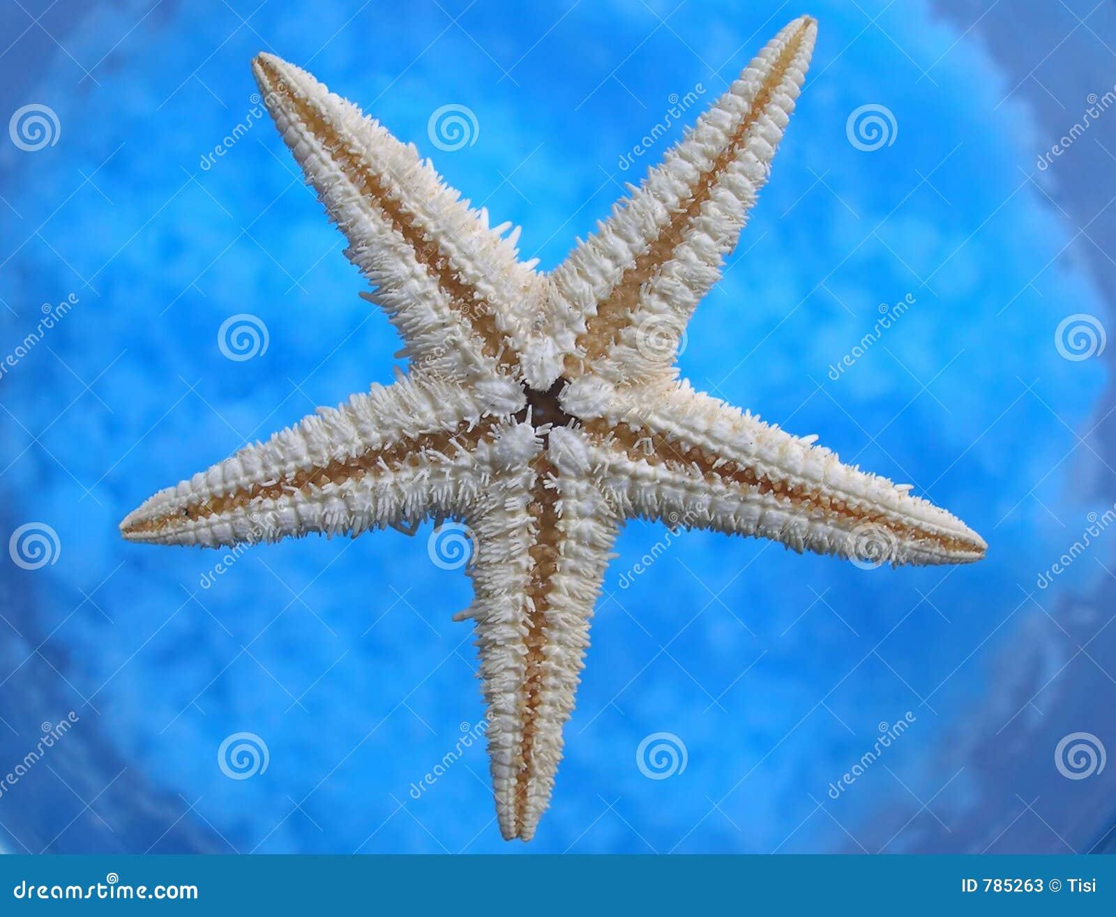 Estrella del océano