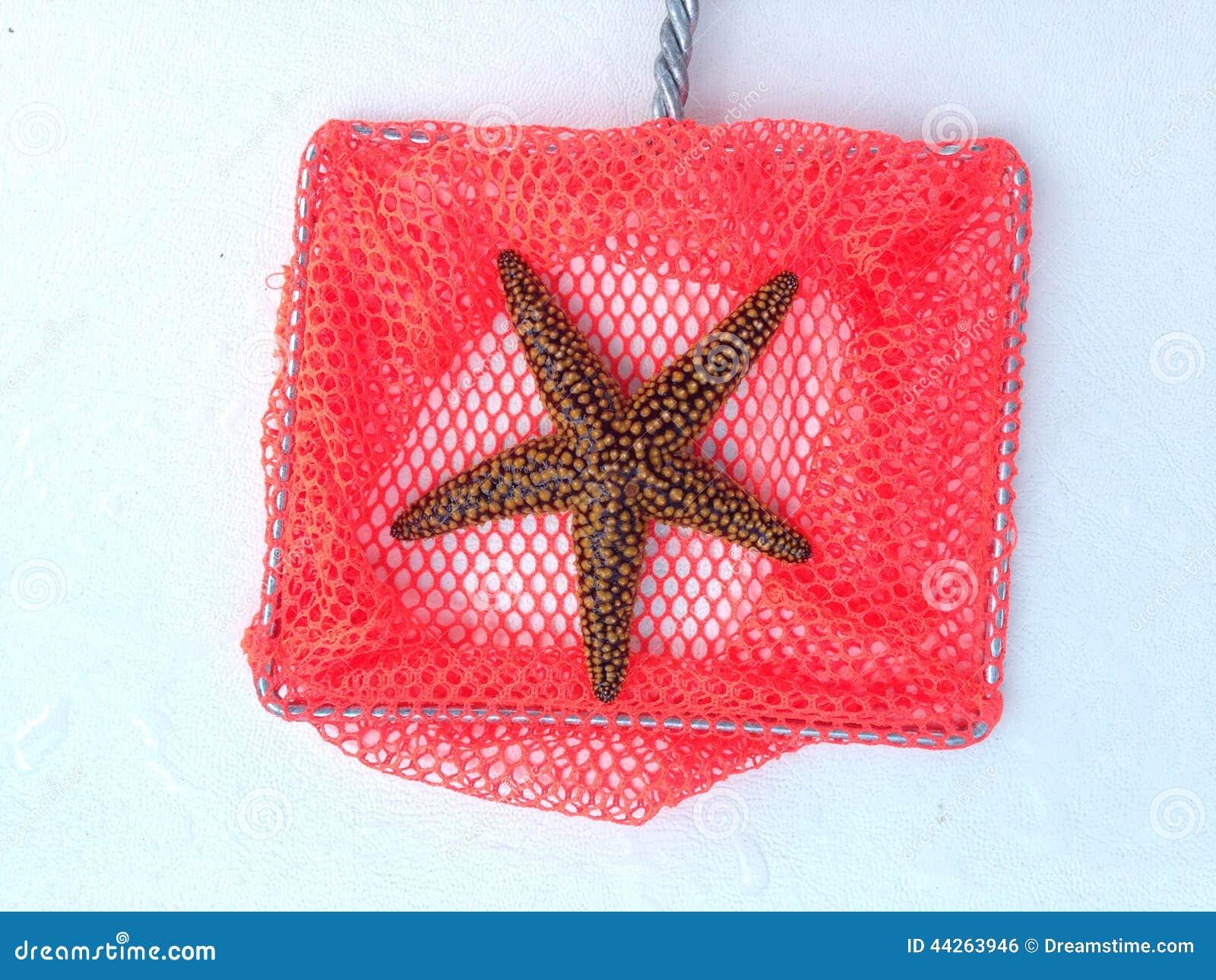 Estrellas De Mar Bonitas Foto De Archivo Imagen De Besos 44263946