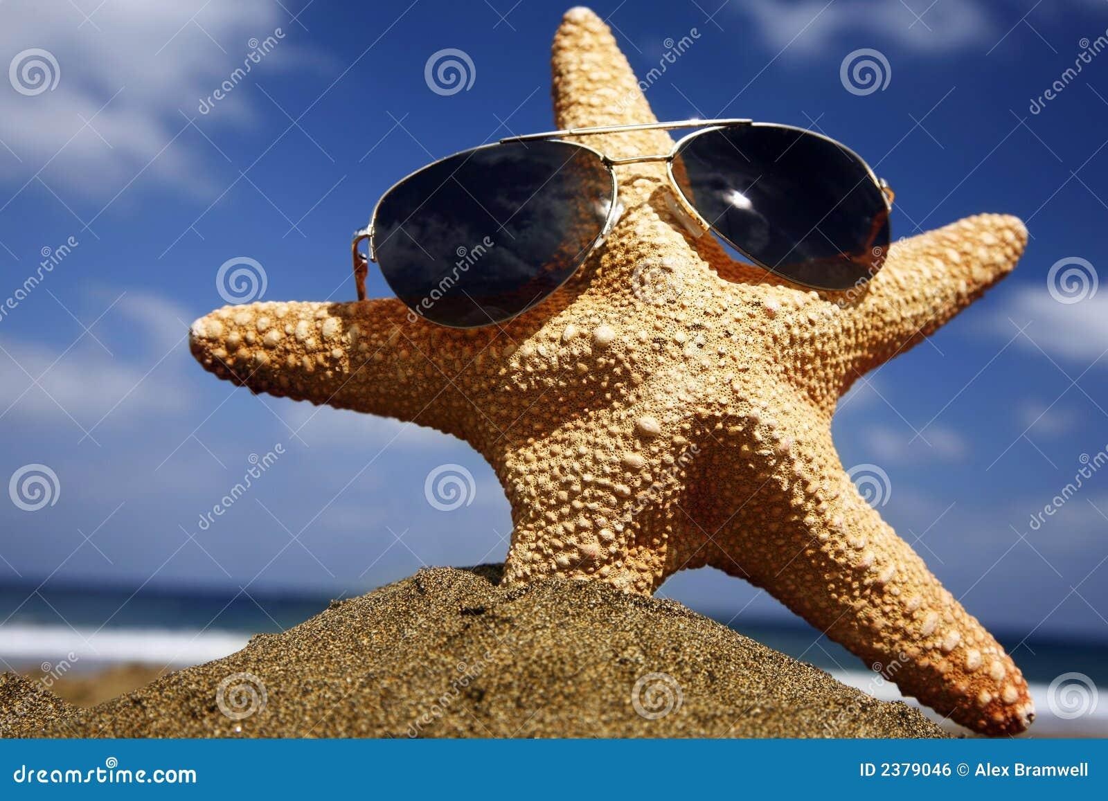Estrellas de mar de la playa con las cortinas