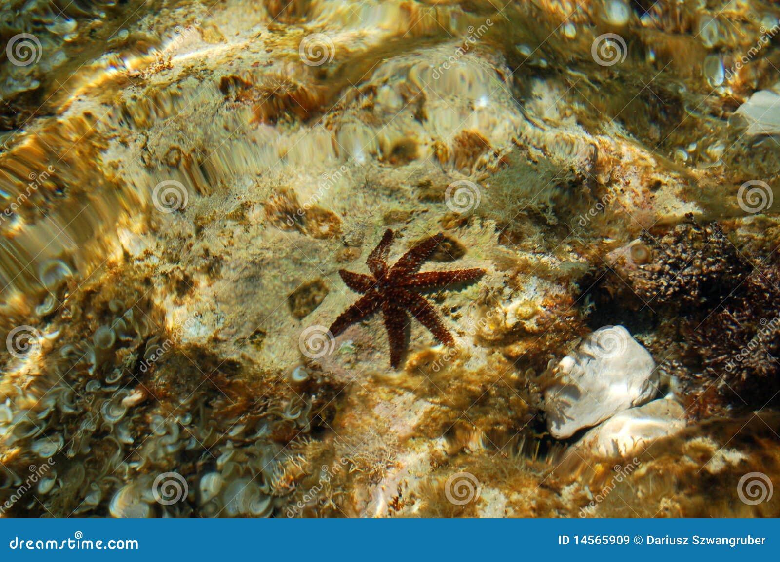 Estrellas de mar en agua