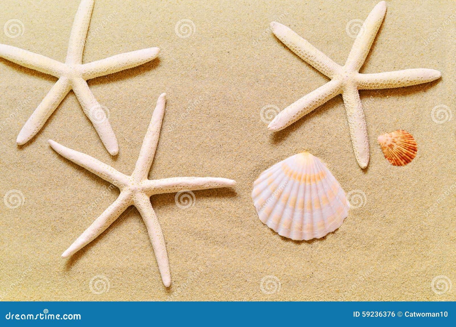 Download Estrellas De Mar En La Playa De La Arena Foto de archivo - Imagen de costa, relajación: 59236376