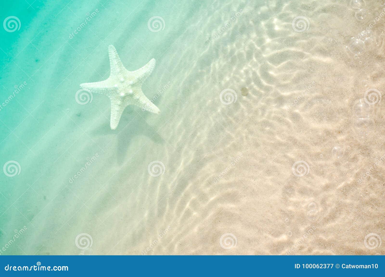 Estrellas de mar en la playa del verano con la arena