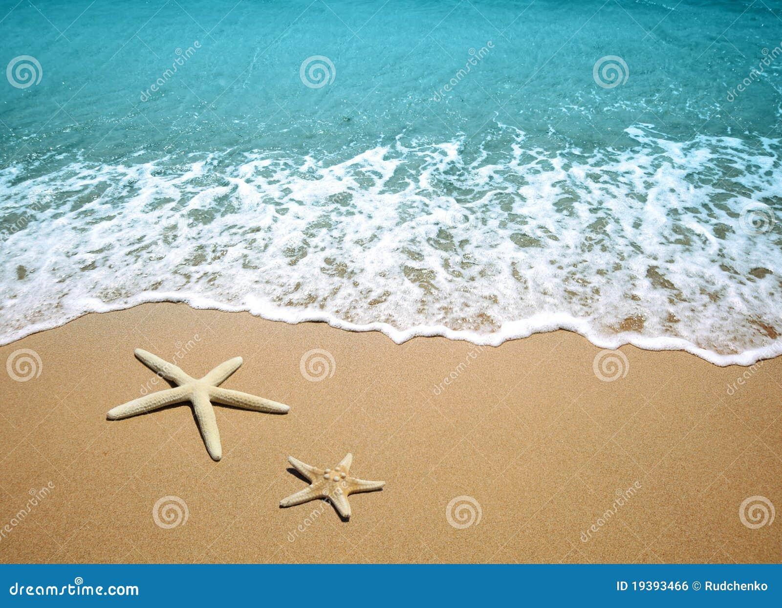 Estrellas de mar en una arena de la playa