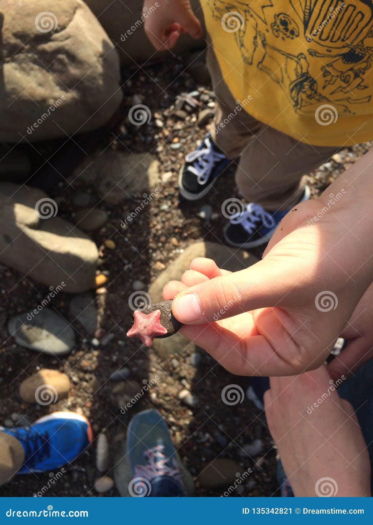 Estrellas de mar minúsculas a disposición