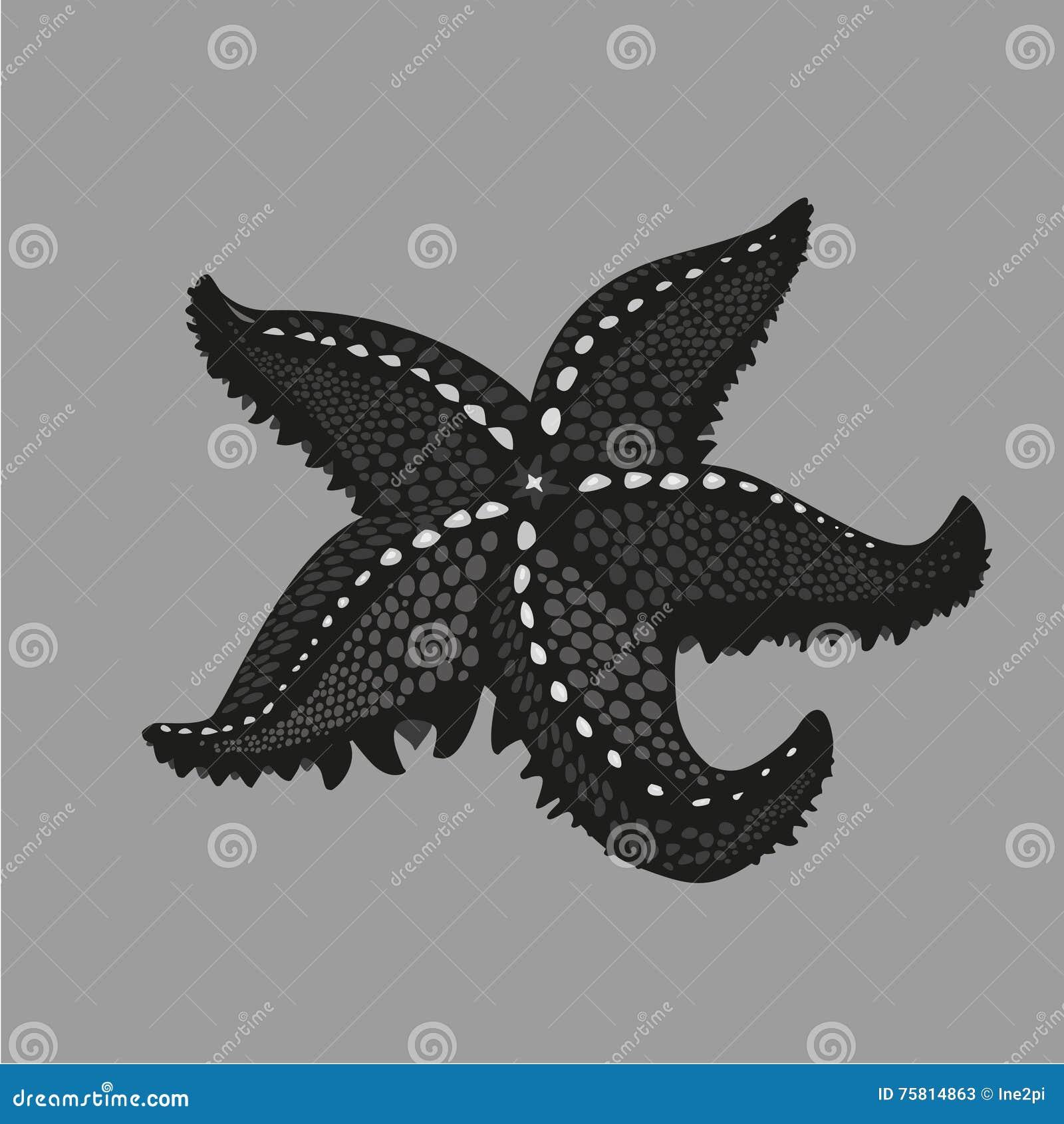 Estrellas De Mar Negras En Fondo Aislado Ejemplo Del Estilo Del