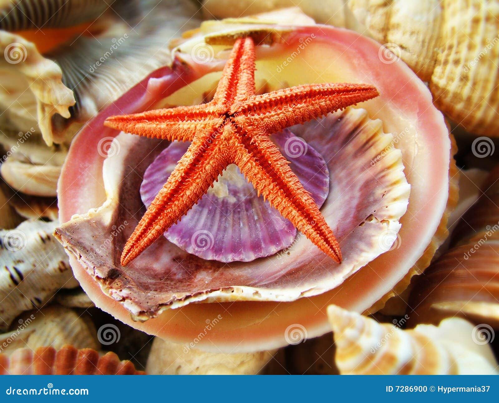 Estrellas de mar y shelles coloreados