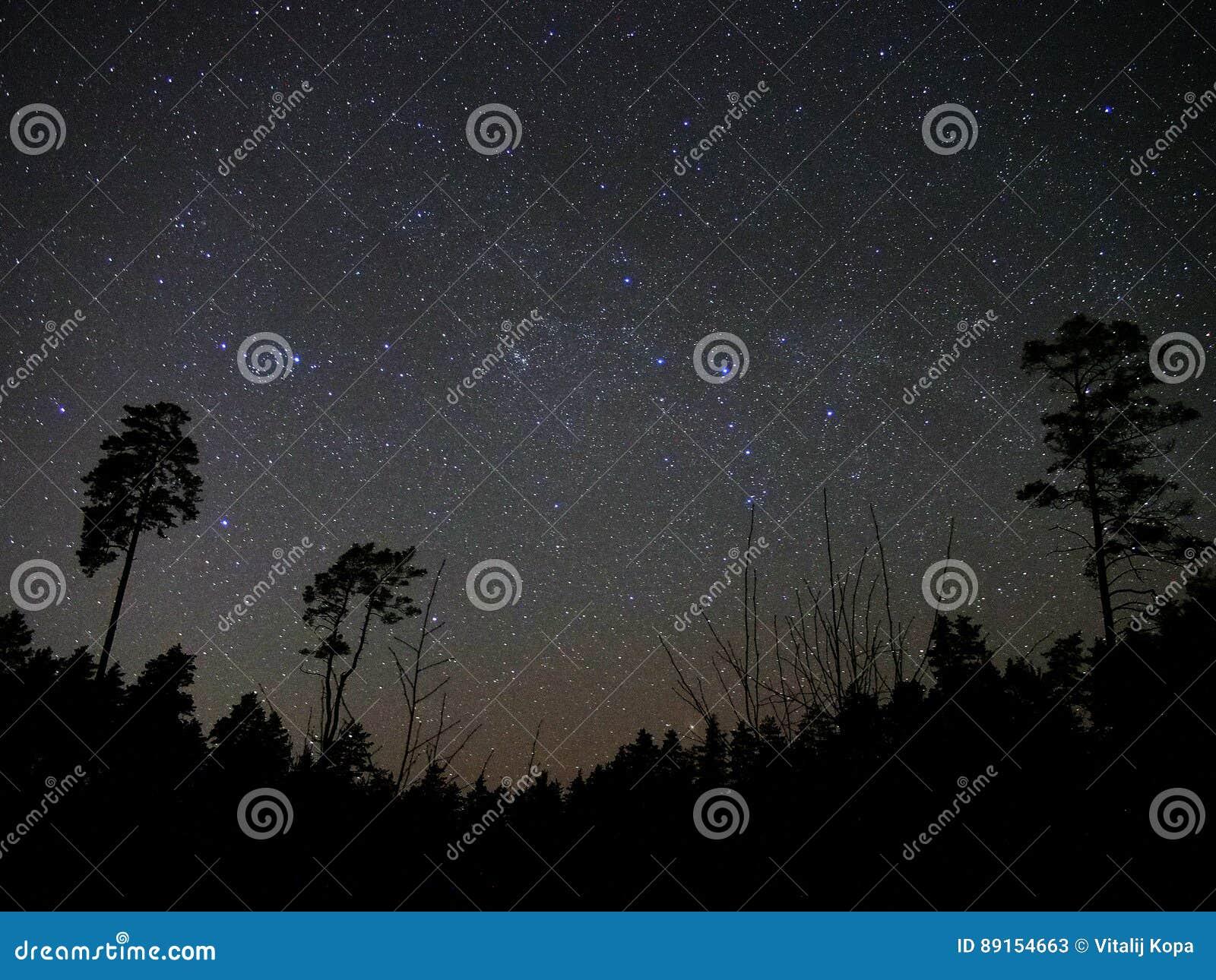 Estrellas del cielo nocturno y atmósfera del bosque