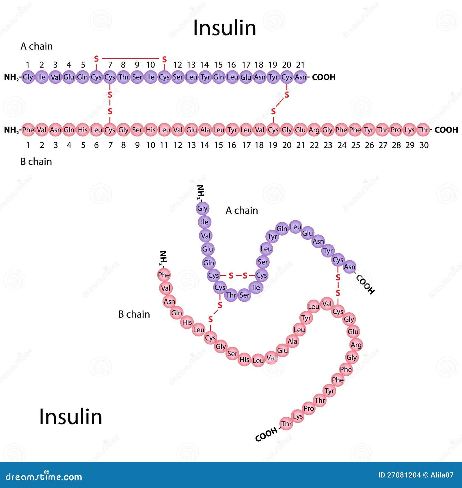 Estructura De La Insulina Humana Ilustración del Vector