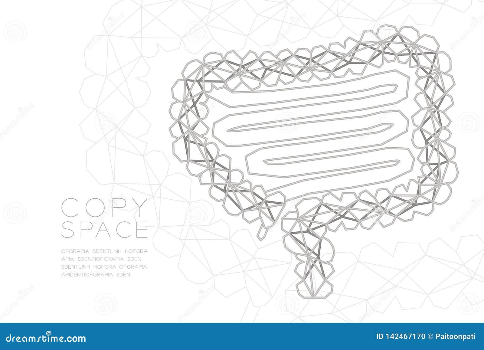 Estructura de plata del marco del polígono del wireframe de la forma del intestino, ejemplo del diseño de concepto del órgano
