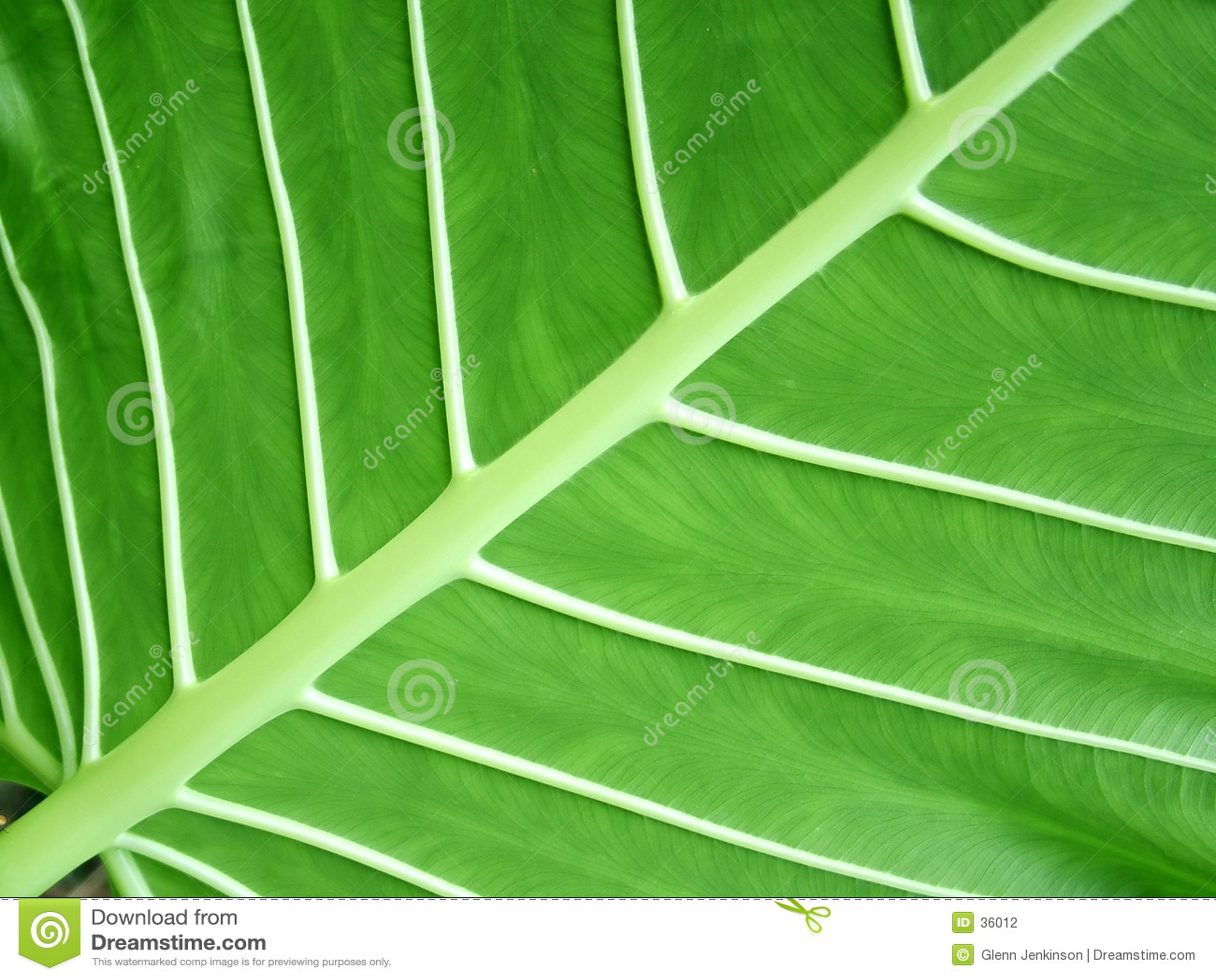 Estrutura da folha