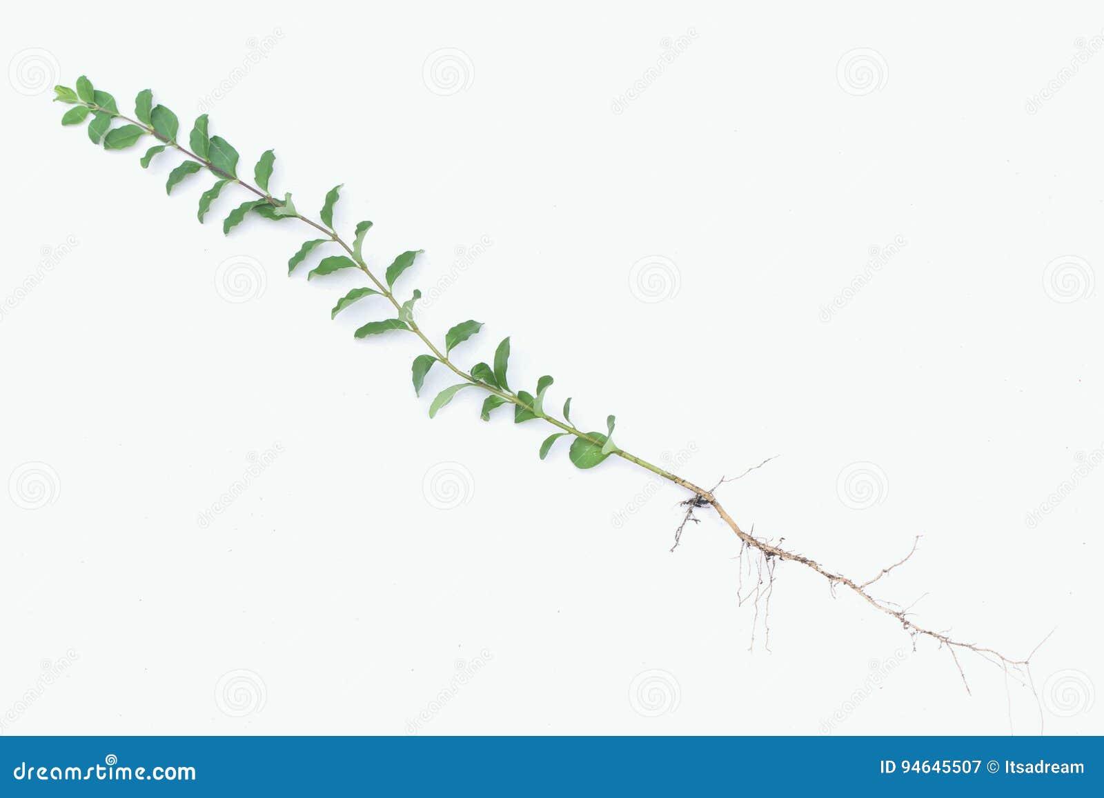 Estrutura de uma planta