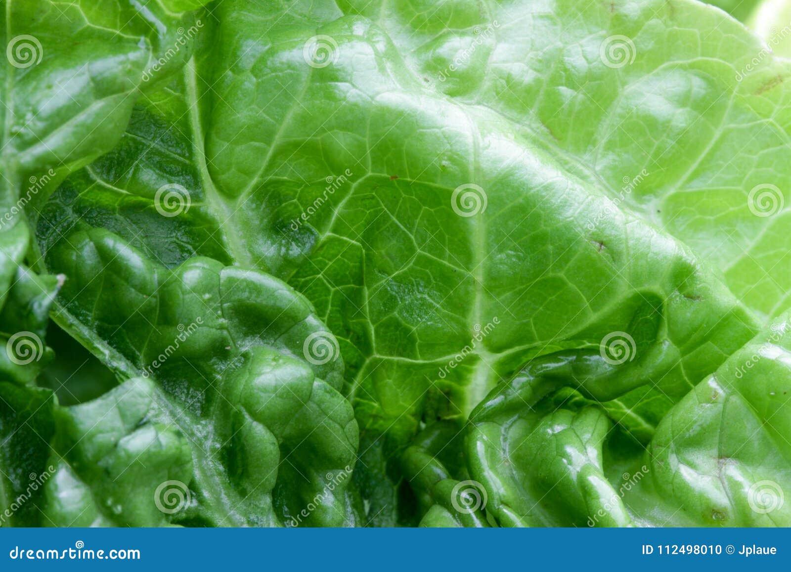 Estrutura macro do fundo das vitaminas do vegetariano vegetal da alface