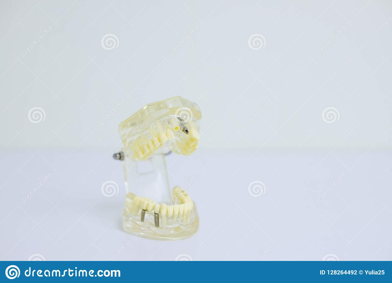 Estudiante dental de la odontología del diente que aprende el modelo de enseñanza que muestra los dientes, las raíces, las gomas,