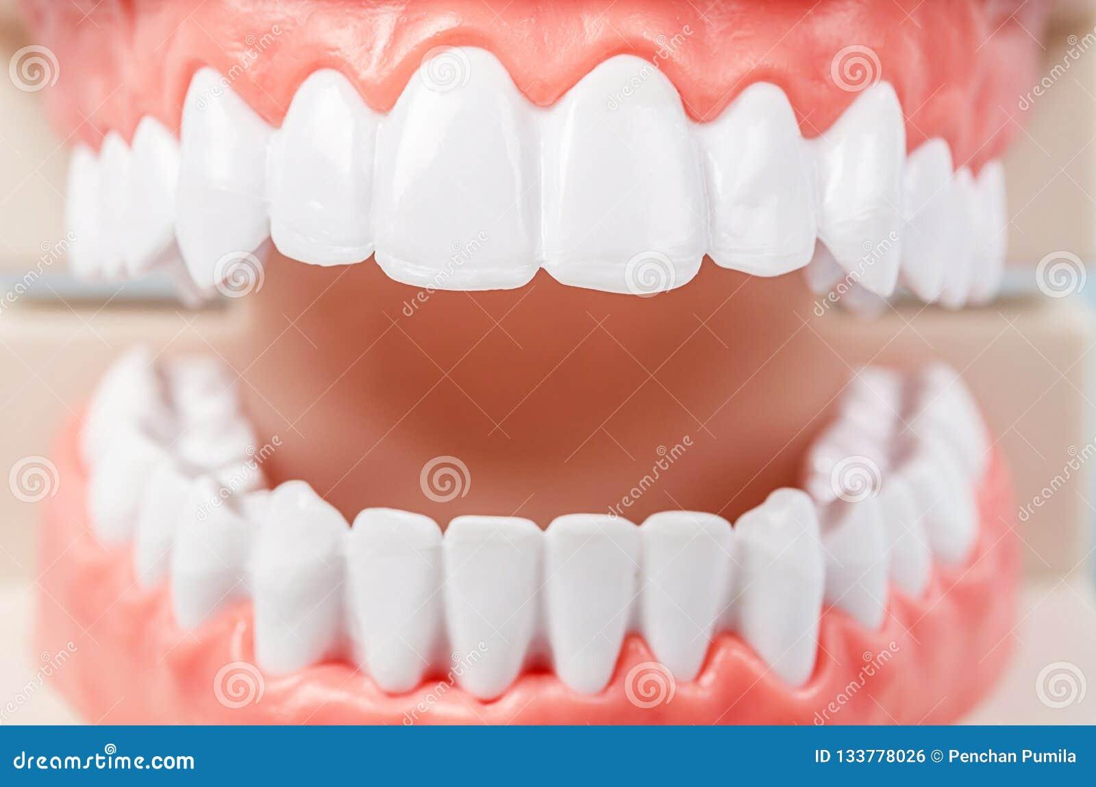 Estudiante dental de la odontología del diente que aprende la enseñanza