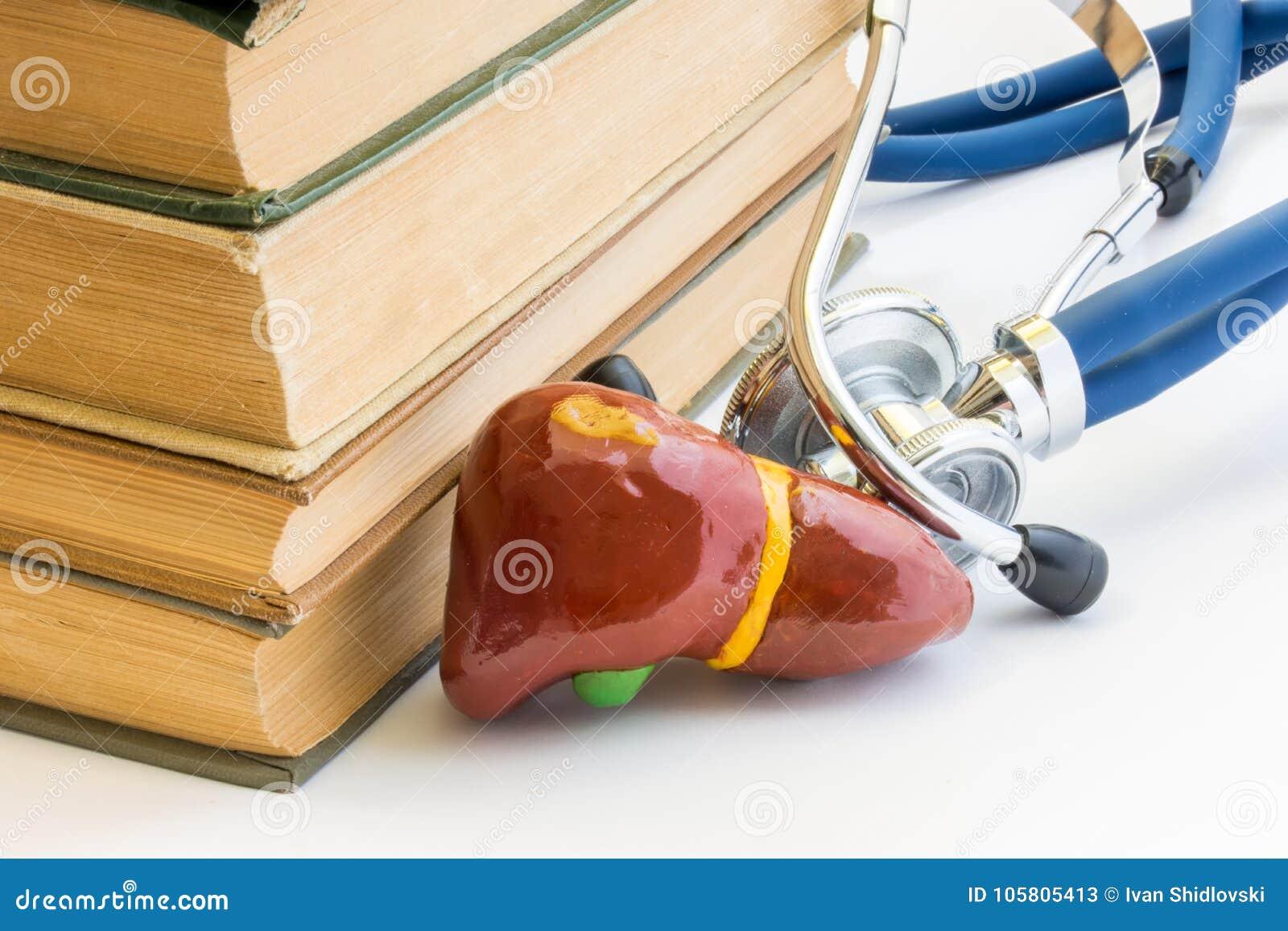 Estudio De La Foto Del Hígado Y De La Vesícula Biliar, él Anatomía ...