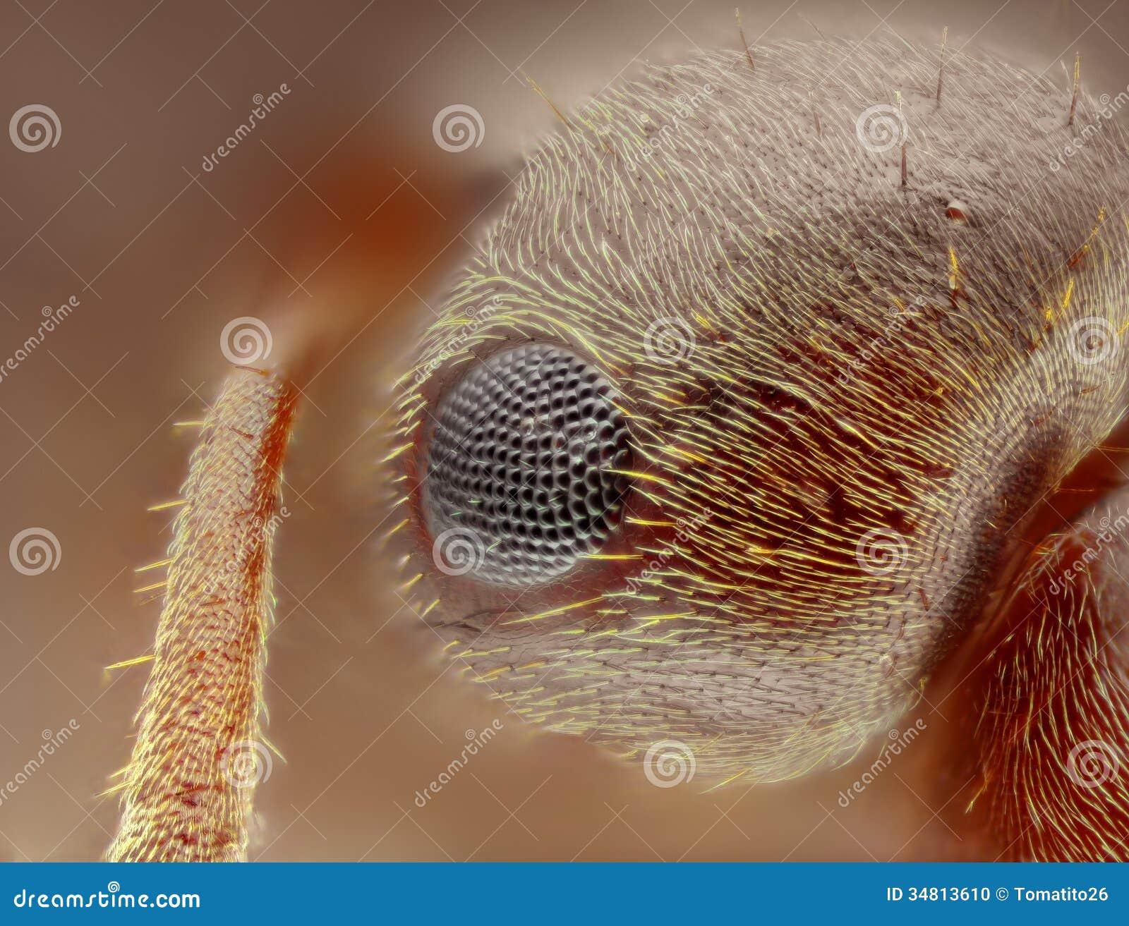 Estudo afiado e detalhado extremo da cabeça da formiga do formica