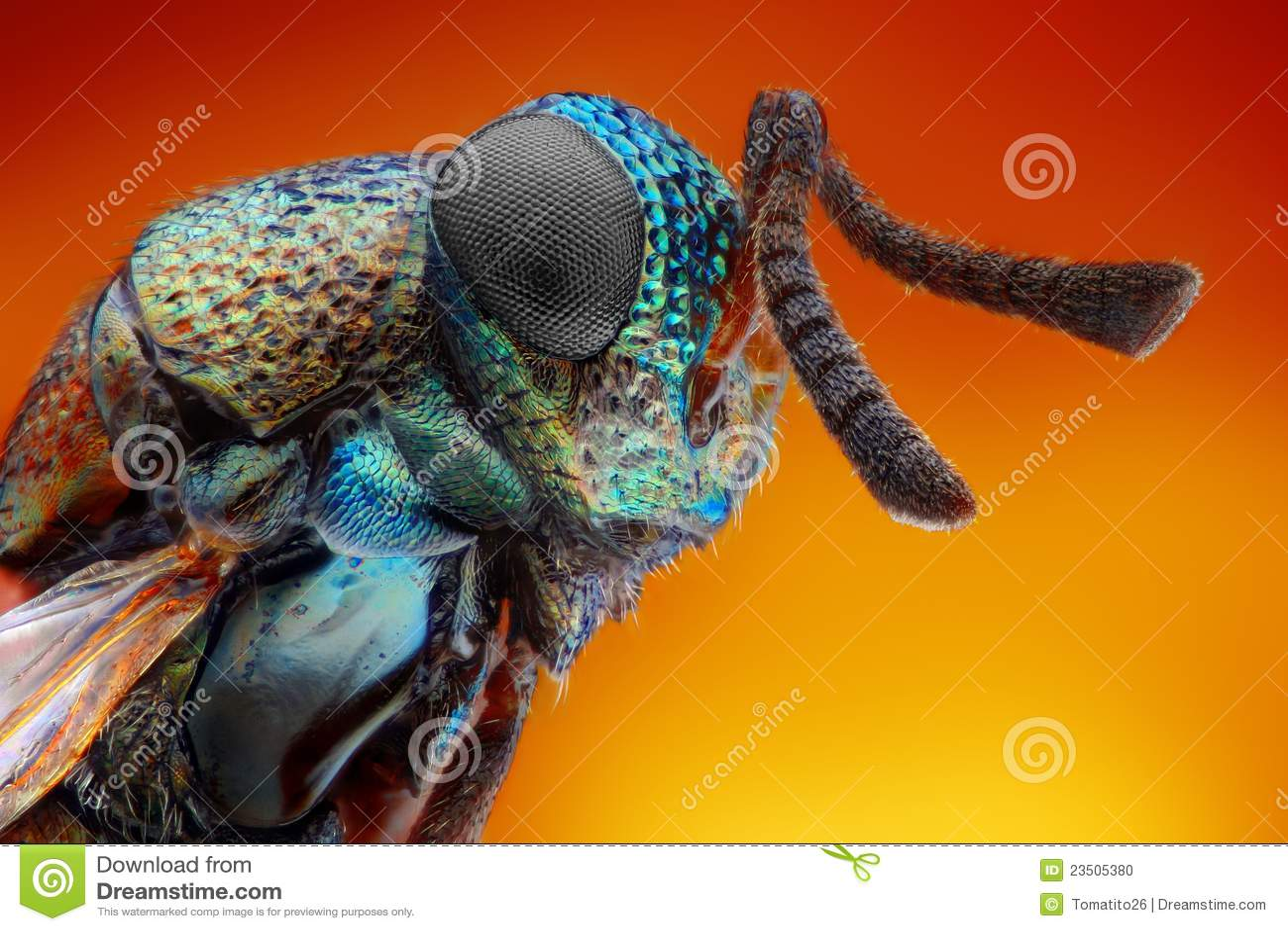 Estudo afiado e detalhado extremo da vespa de 2 milímetros