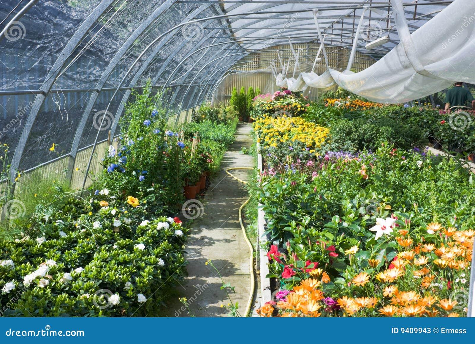 Estufa com flores fotos de stock imagem 9409943 - Foto estufa ...