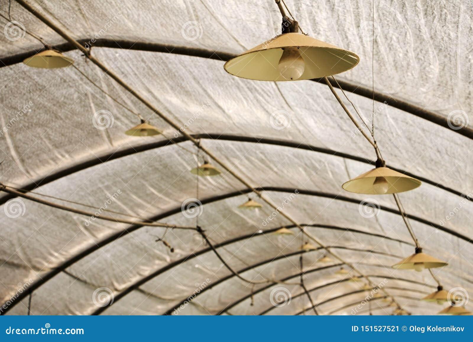 Estufa com iluminação de lâmpadas e de ampolas acima do fardo do telhado para o crescimento industrial da morango A lâmpada está