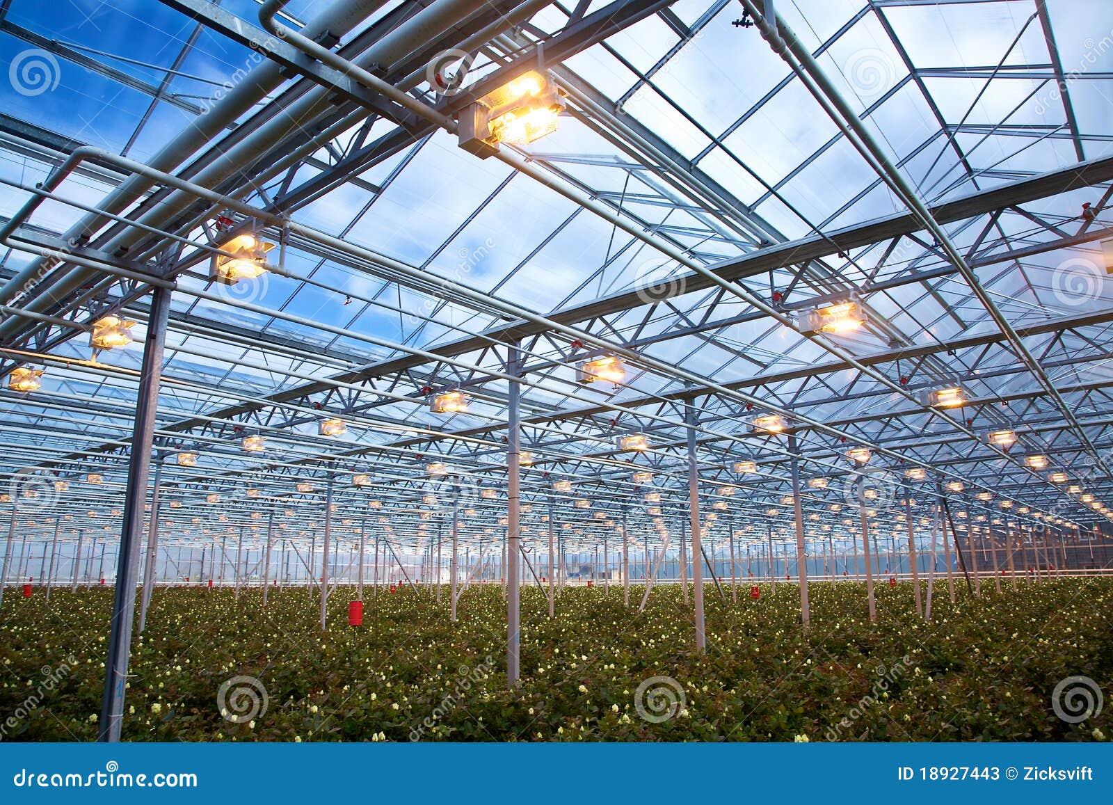 Estufa das rosas fotos de stock imagem 18927443 - Foto estufa ...