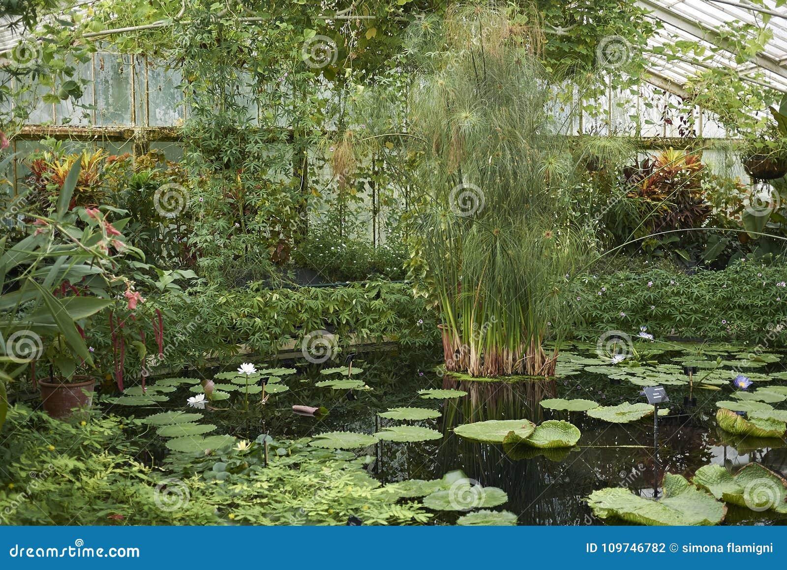 Estufa do jardim de Kew