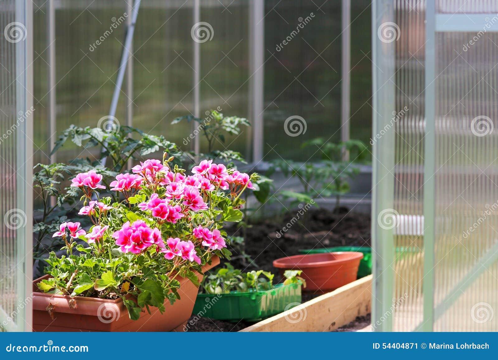 Estufa para flores e plantas foto de stock imagem 54404871 - Foto estufa ...
