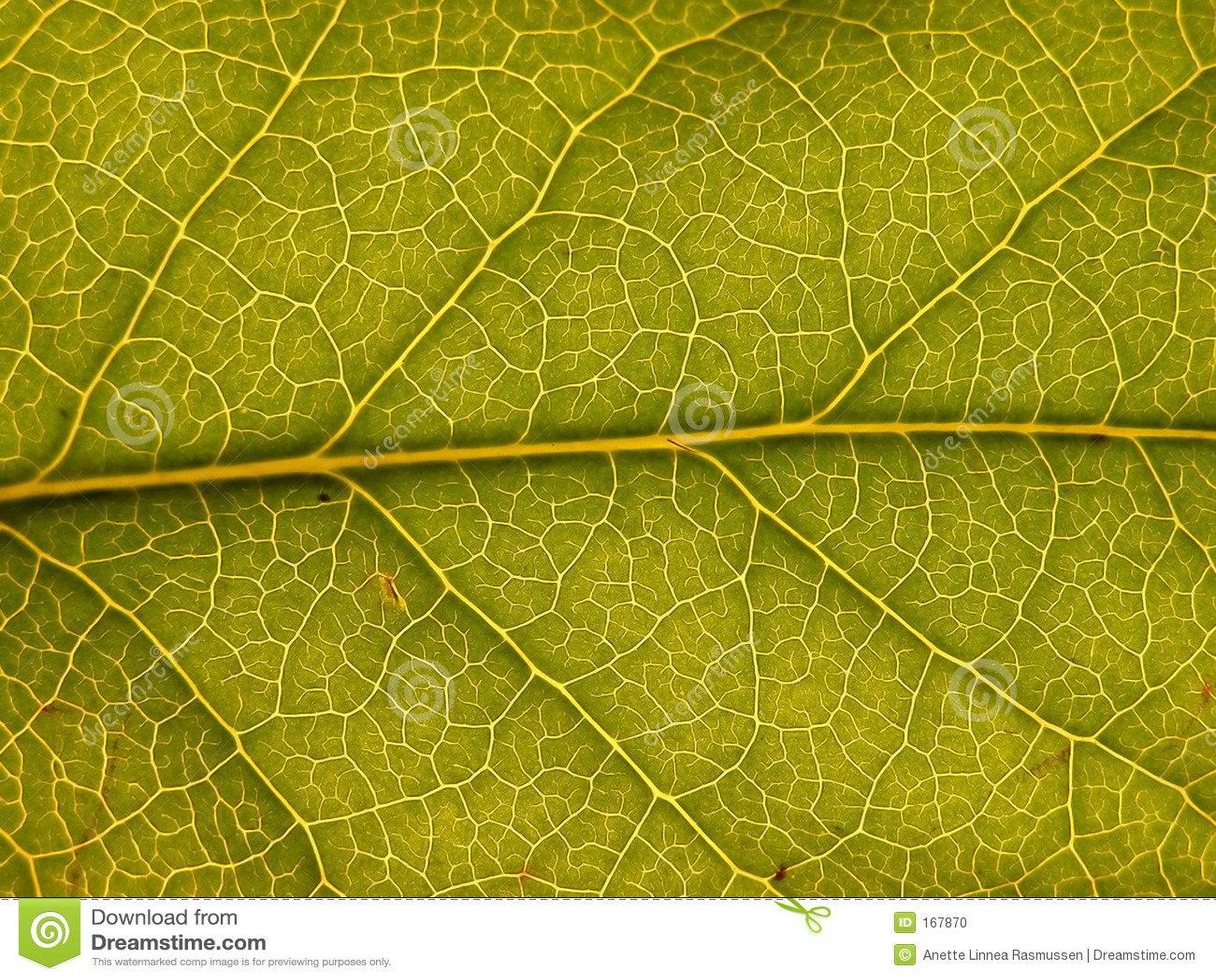 Esverdeie a folha