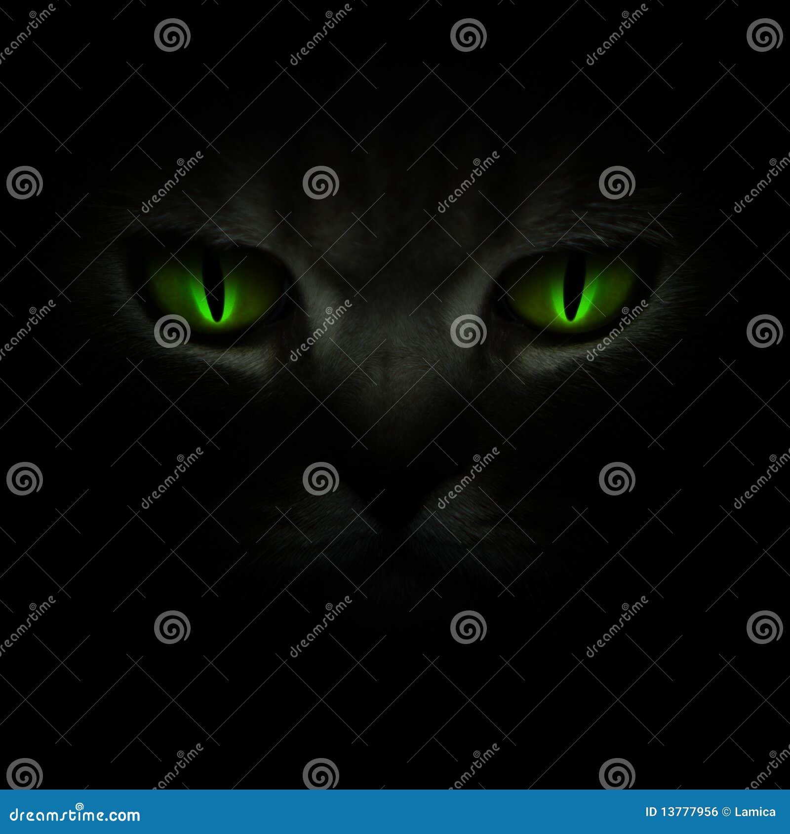 Esverdeie os olhos de gato que incandescem na obscuridade