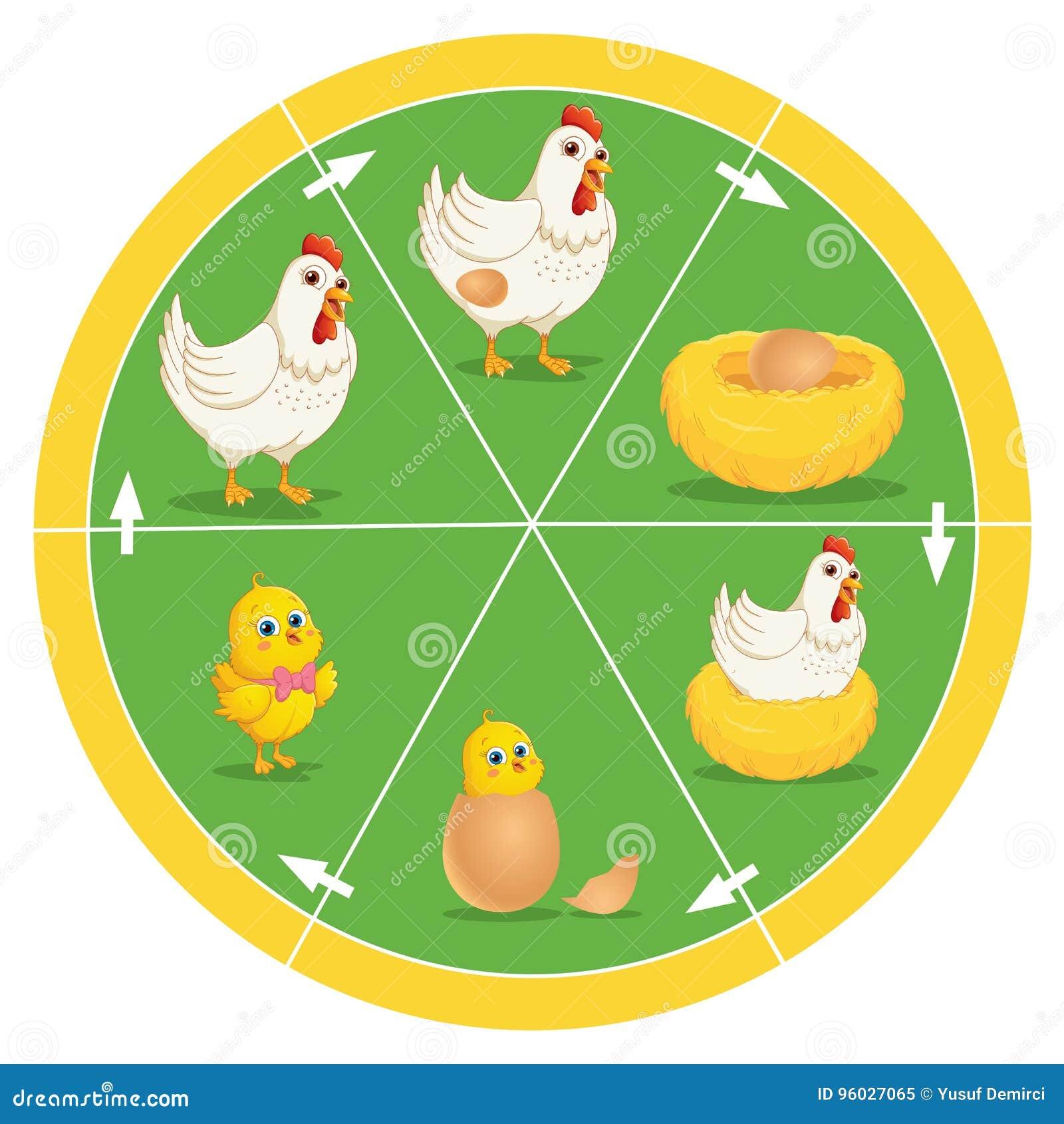 Etap życia kurczaka wektoru ilustracja