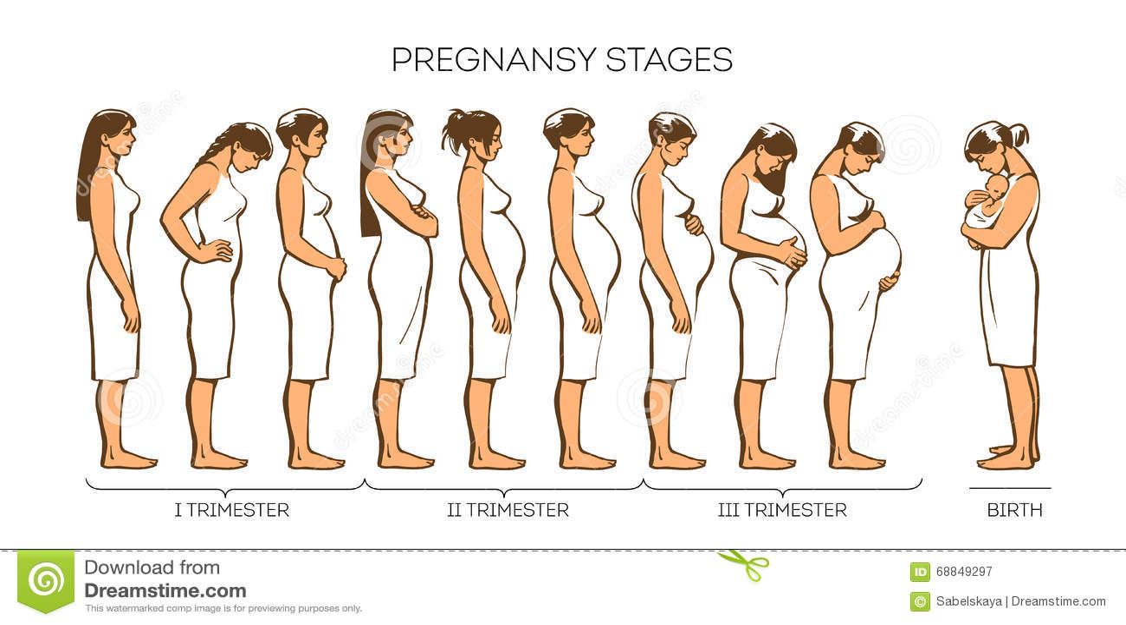 Etapas Del Embarazo De Las Mujeres Ilustraci 243 N Del Vector