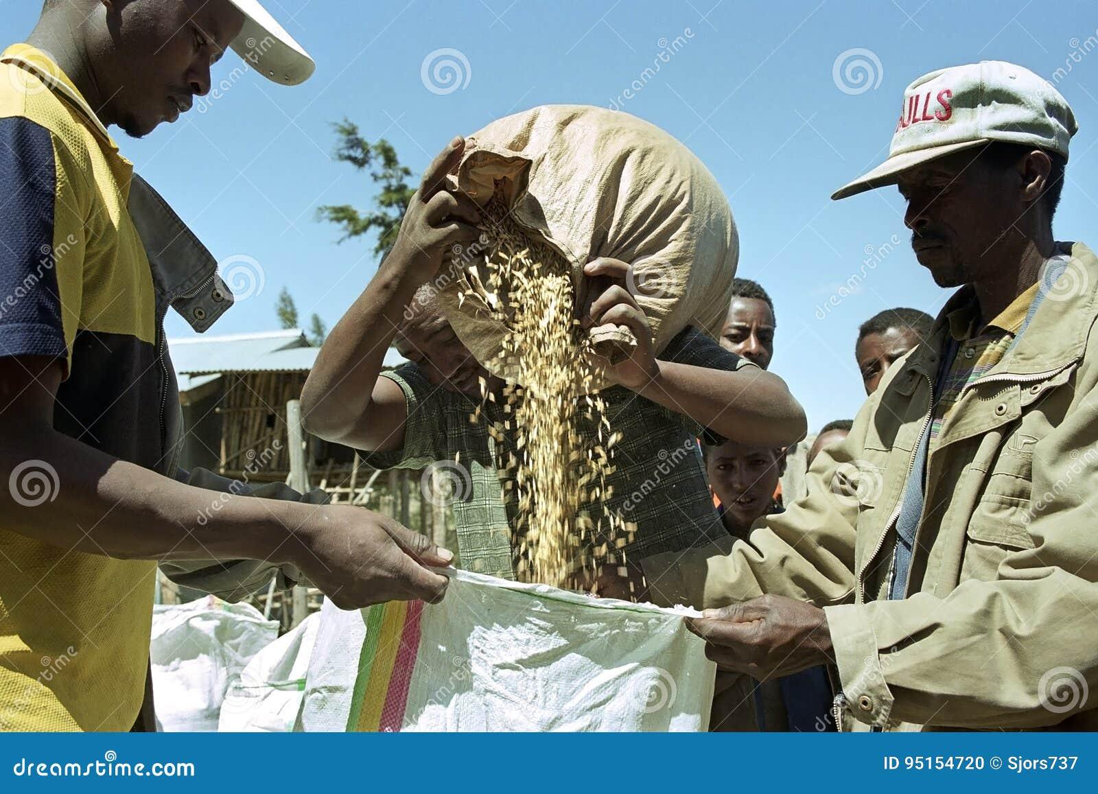 Ethiopian farmer sells on market grain to buyers