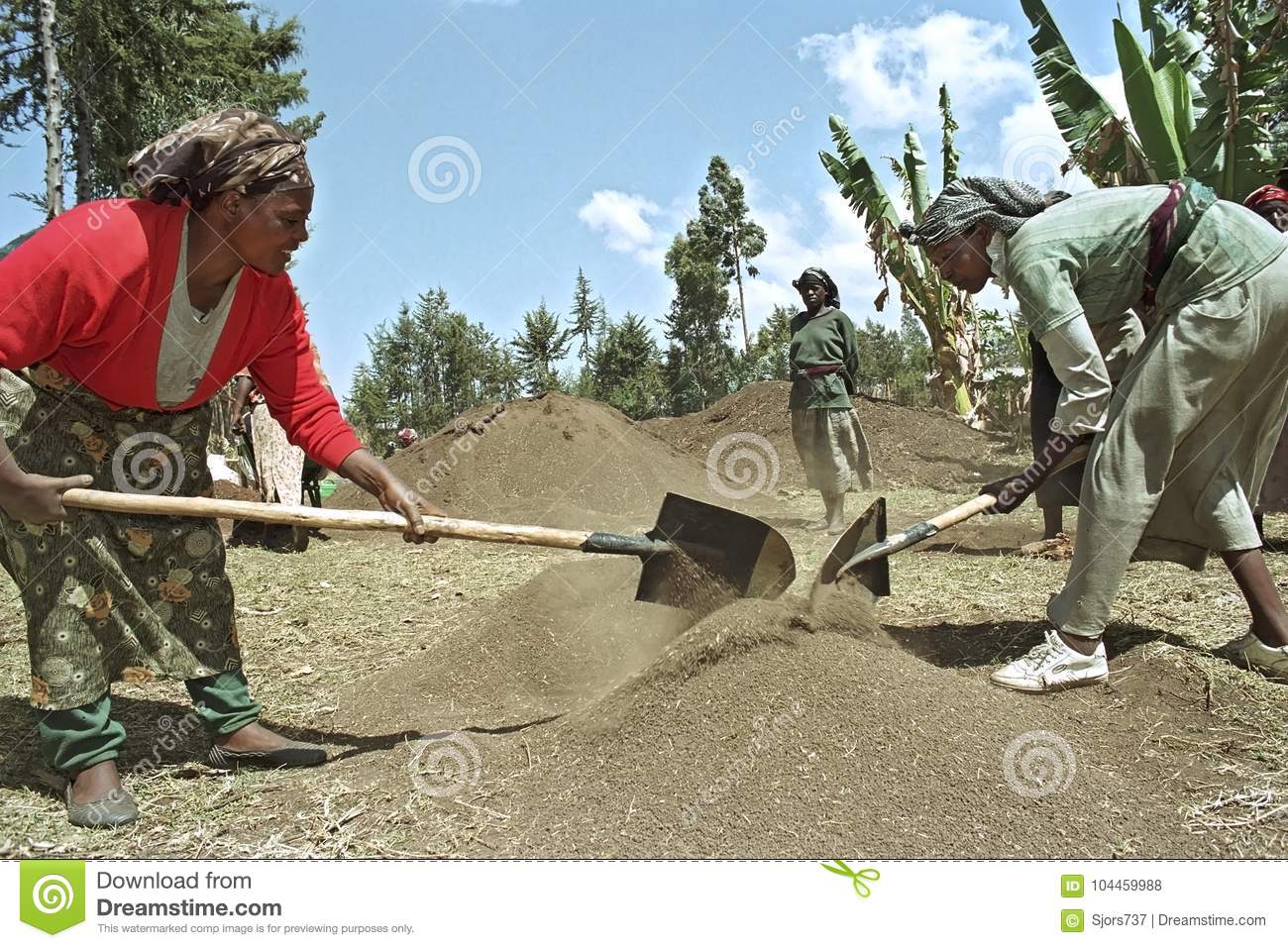 Ethiopian Women Work In Reforestation Project Editorial
