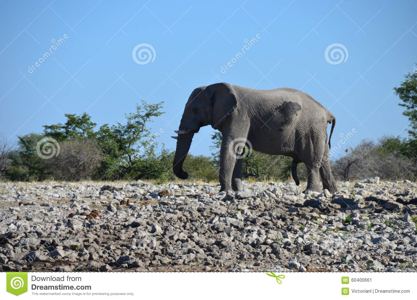 Etosha国家公园,纳米比亚