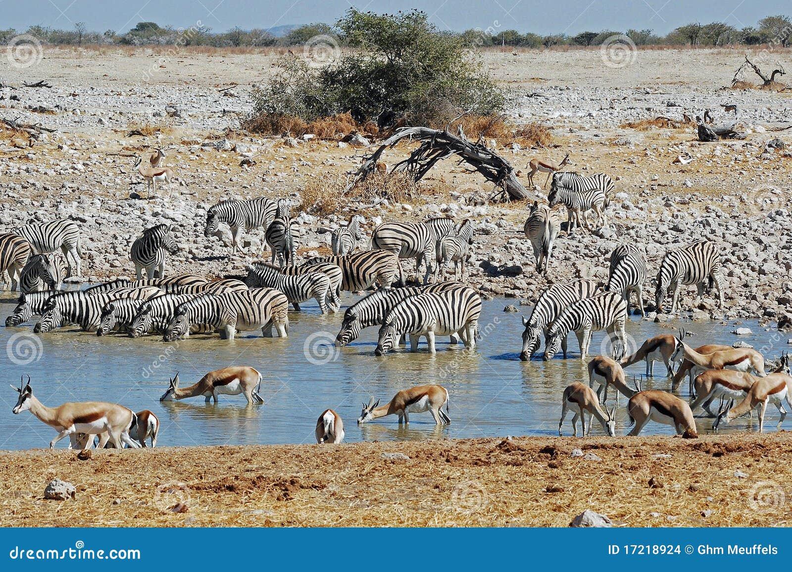 Etosha National Park landscape with pond water