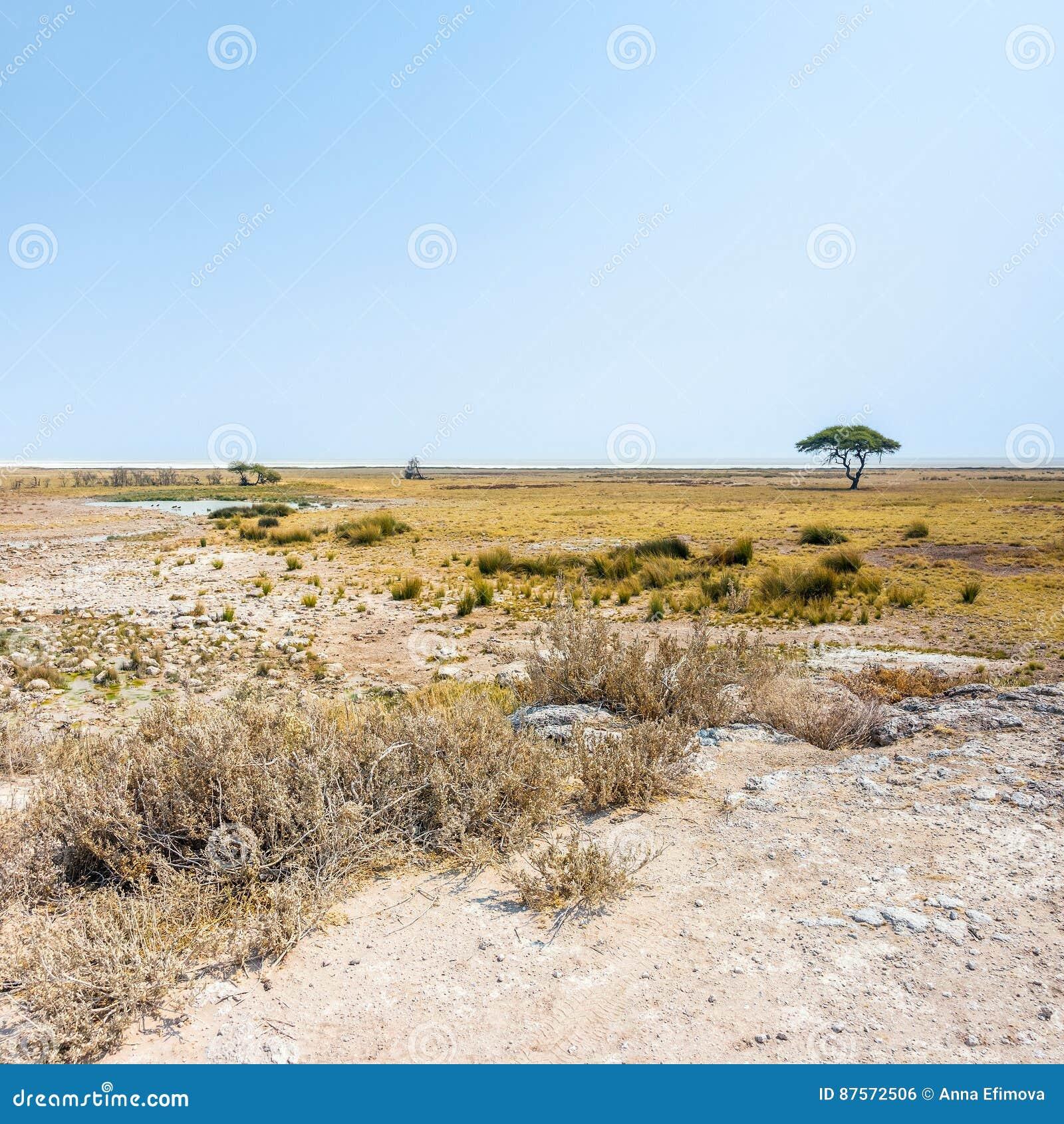 Etosha niecka i otwarte sawannowe równiny Etosha park narodowy