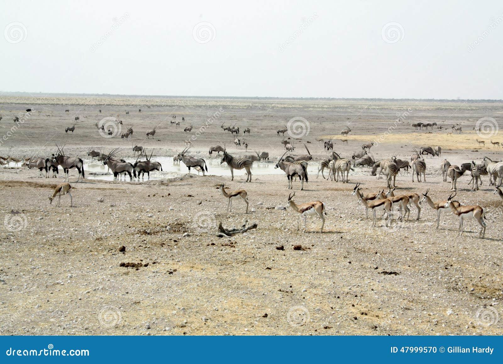 Etosha Waterhole Landscape
